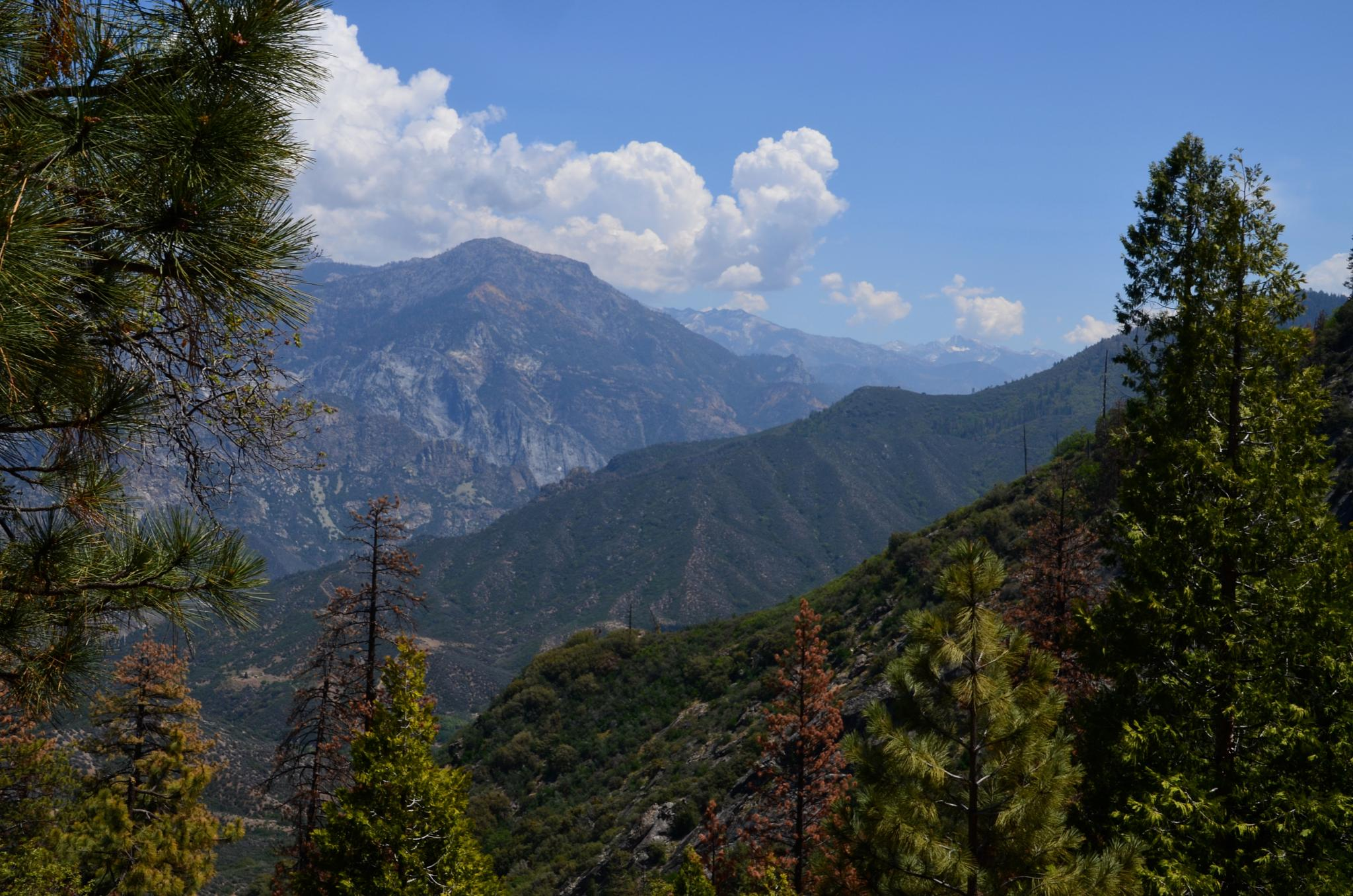 Kings Canyon National Park by Laurie Deakin