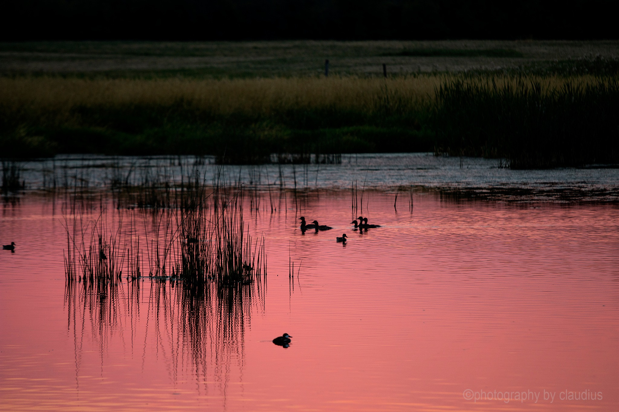 Calm evening by the pond... by Claudius Cazan