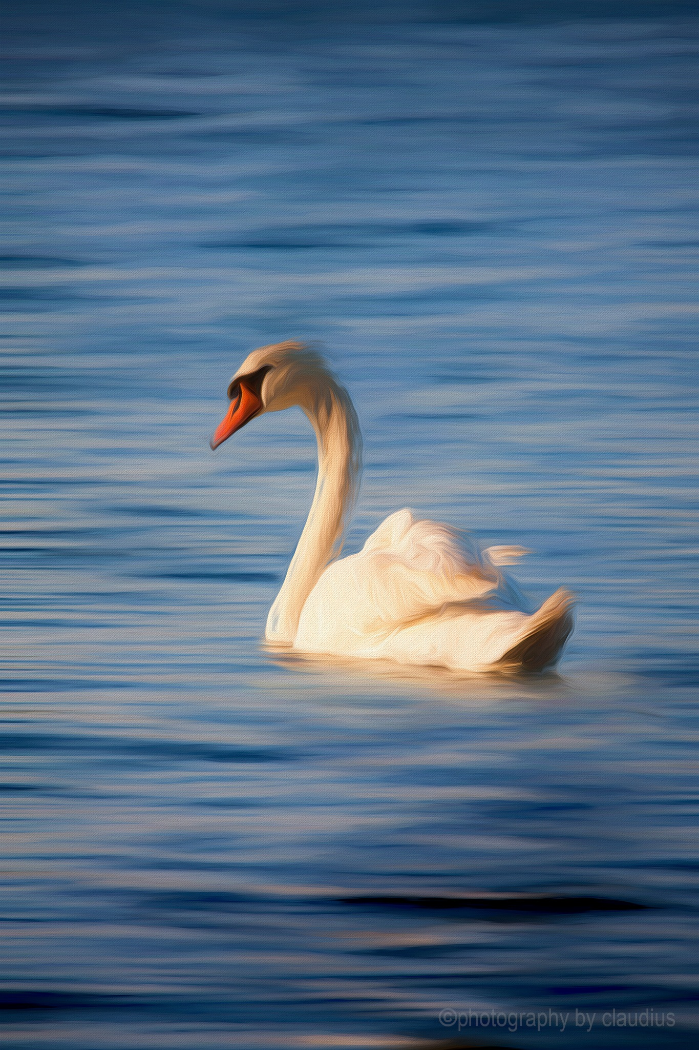 A late swan... by Claudius Cazan