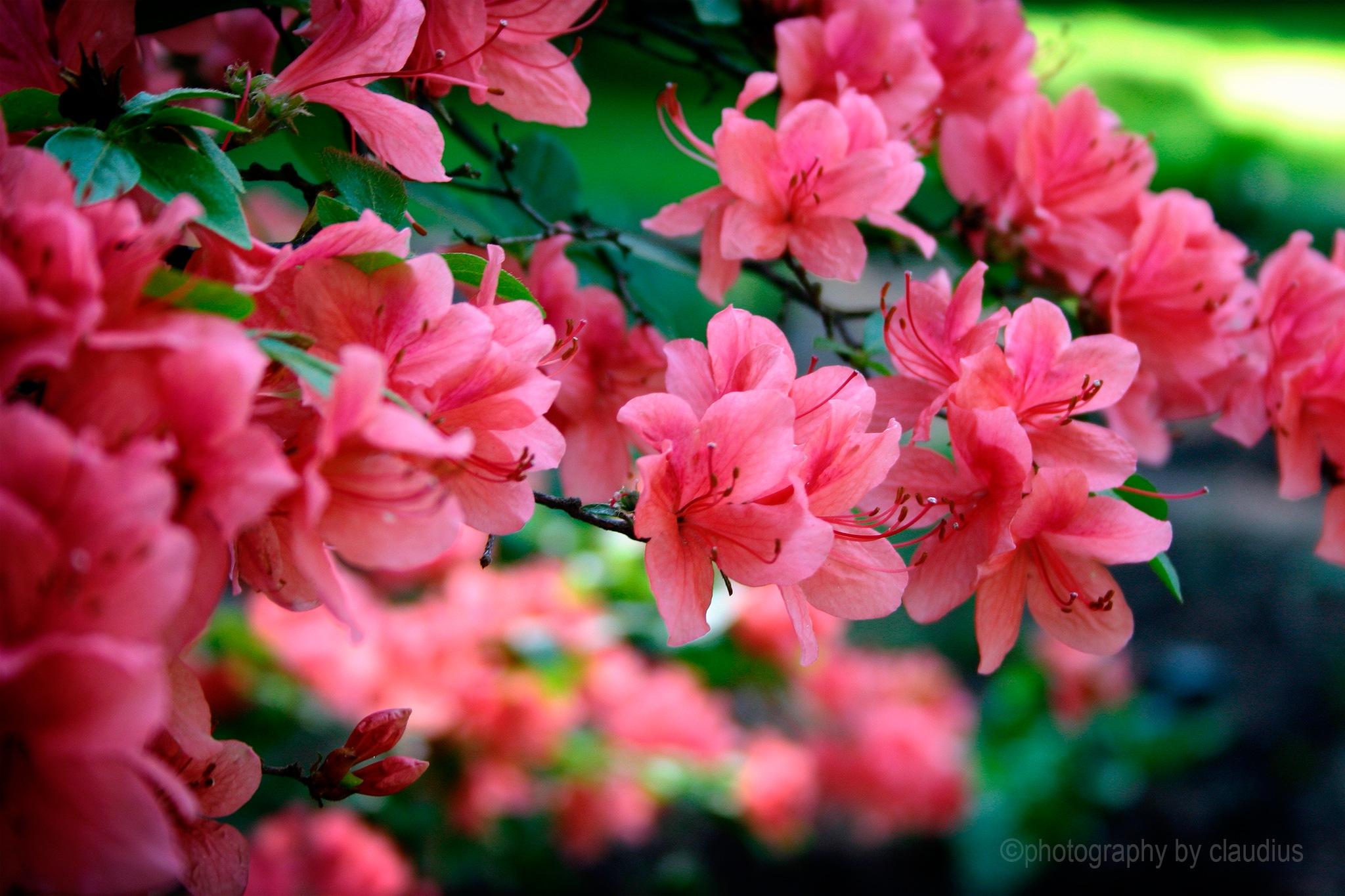 I'm thinking Spring... by Claudius Cazan