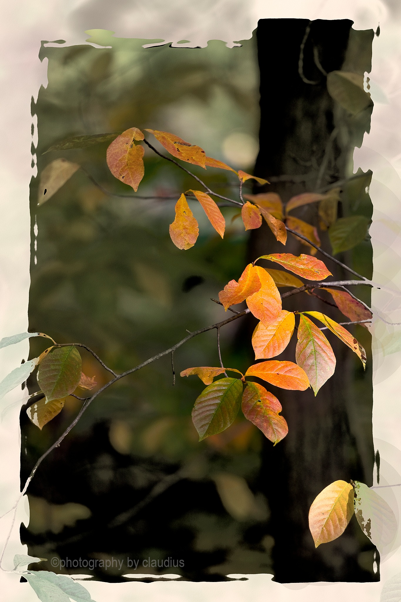 Autumn impression... by Claudius Cazan
