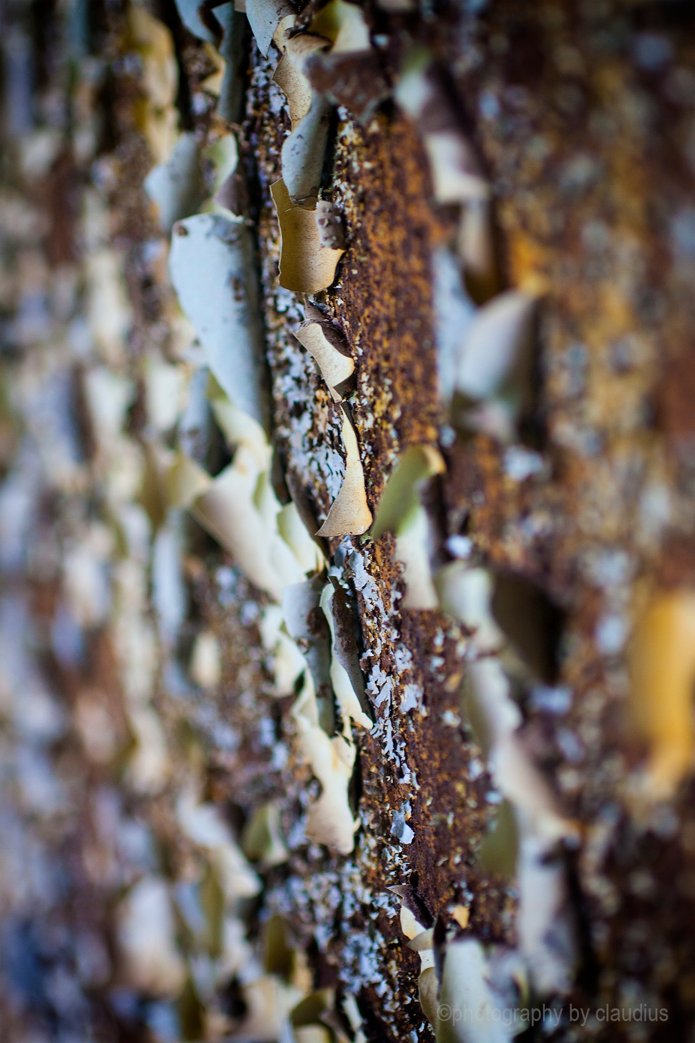 Chipping paint and rust by Claudius Cazan