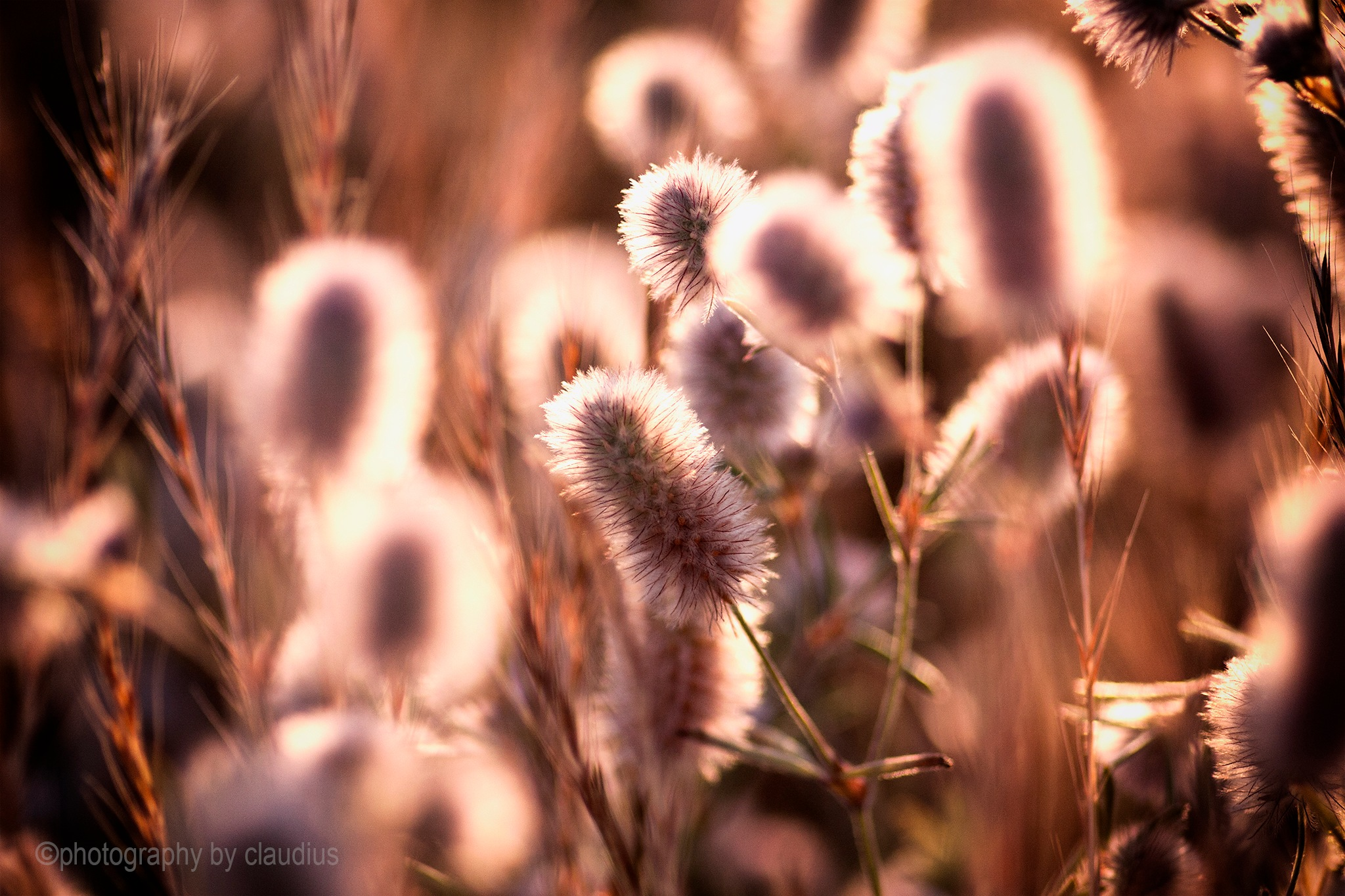 Even the grasses were watching the sunset... by Claudius Cazan