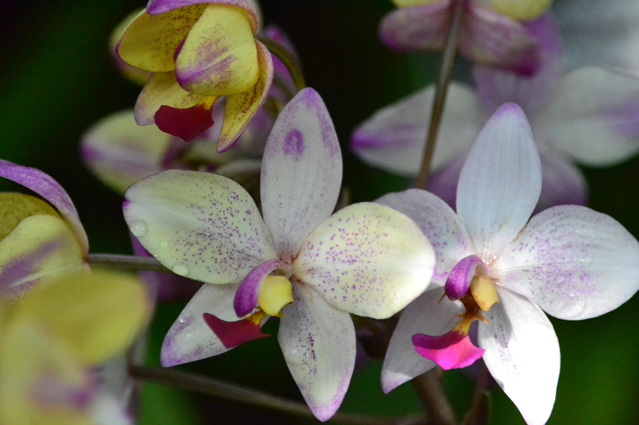 Orchids by kelli.oconnormays