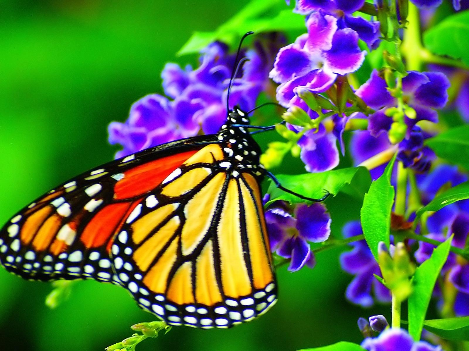 butterfly by kelli.oconnormays