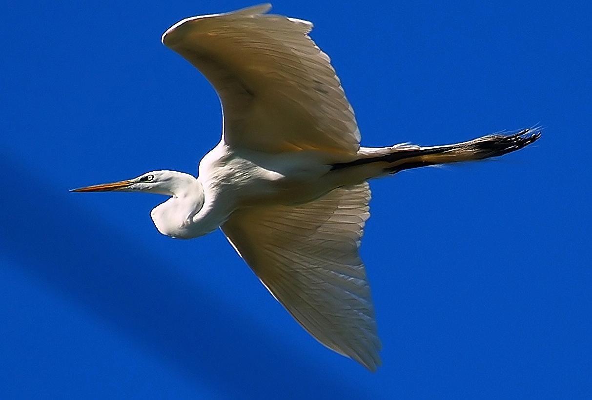Flying High by kelli.oconnormays