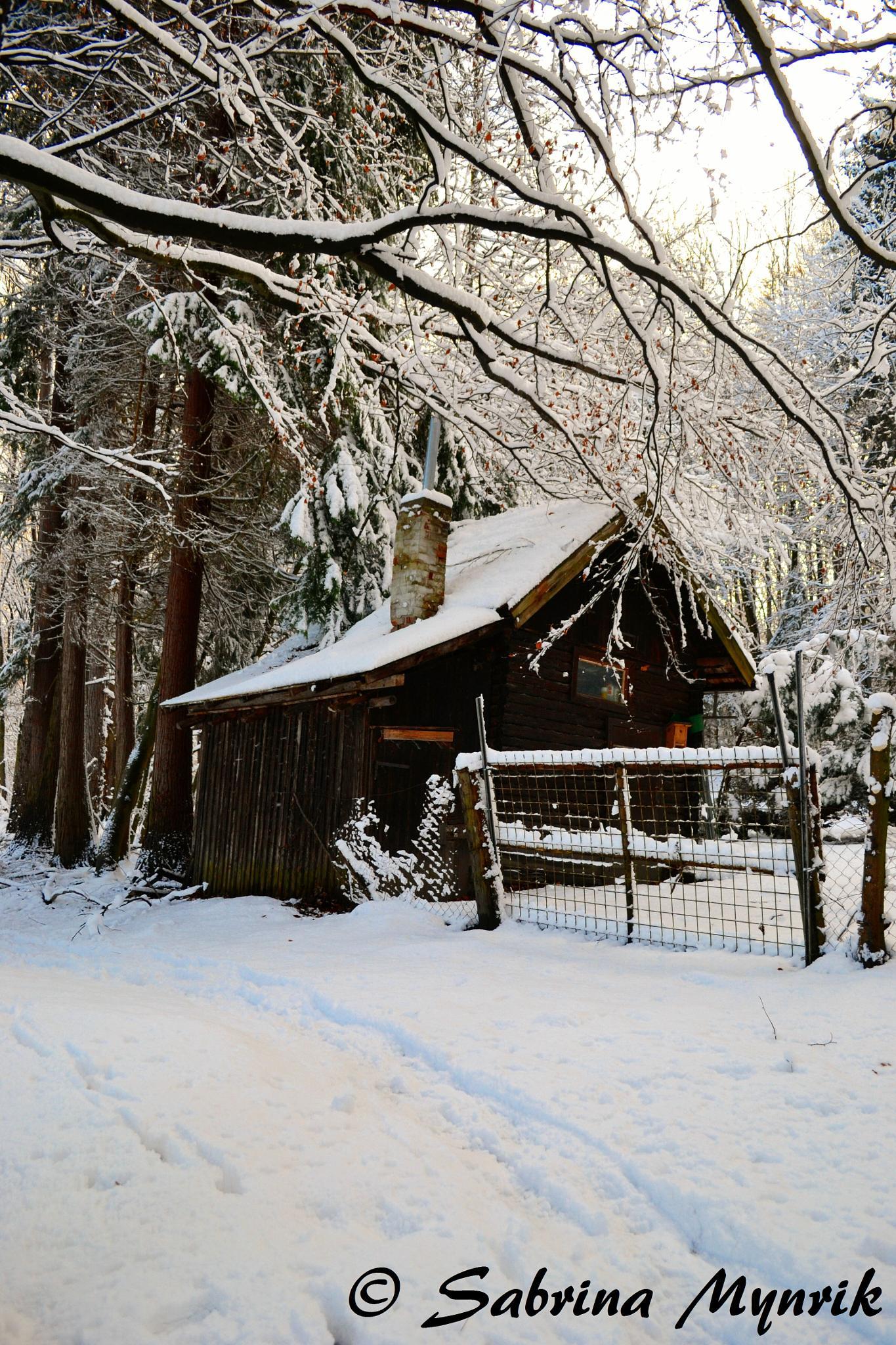 Snowchottage by Sabrina Mynarik