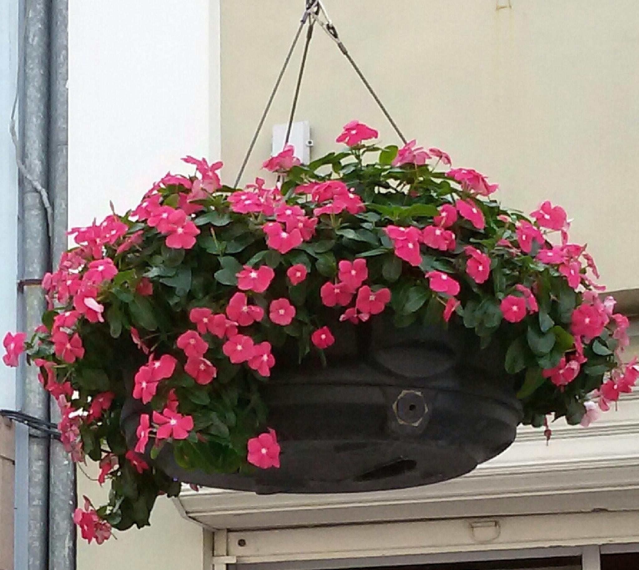 The Pink flowers by nadejdagecheva