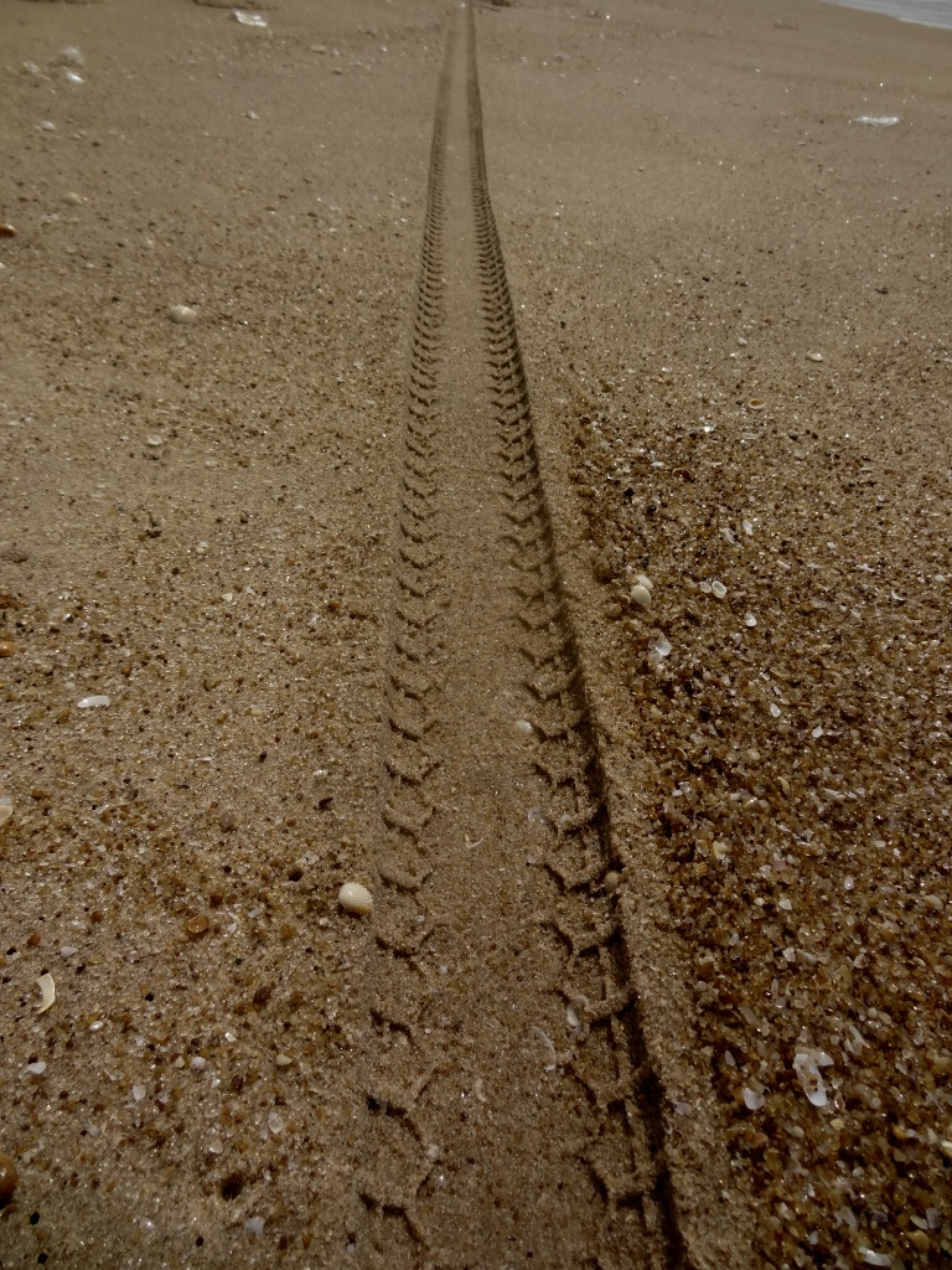 Bike Track on beach by samantha.jenkins.5030