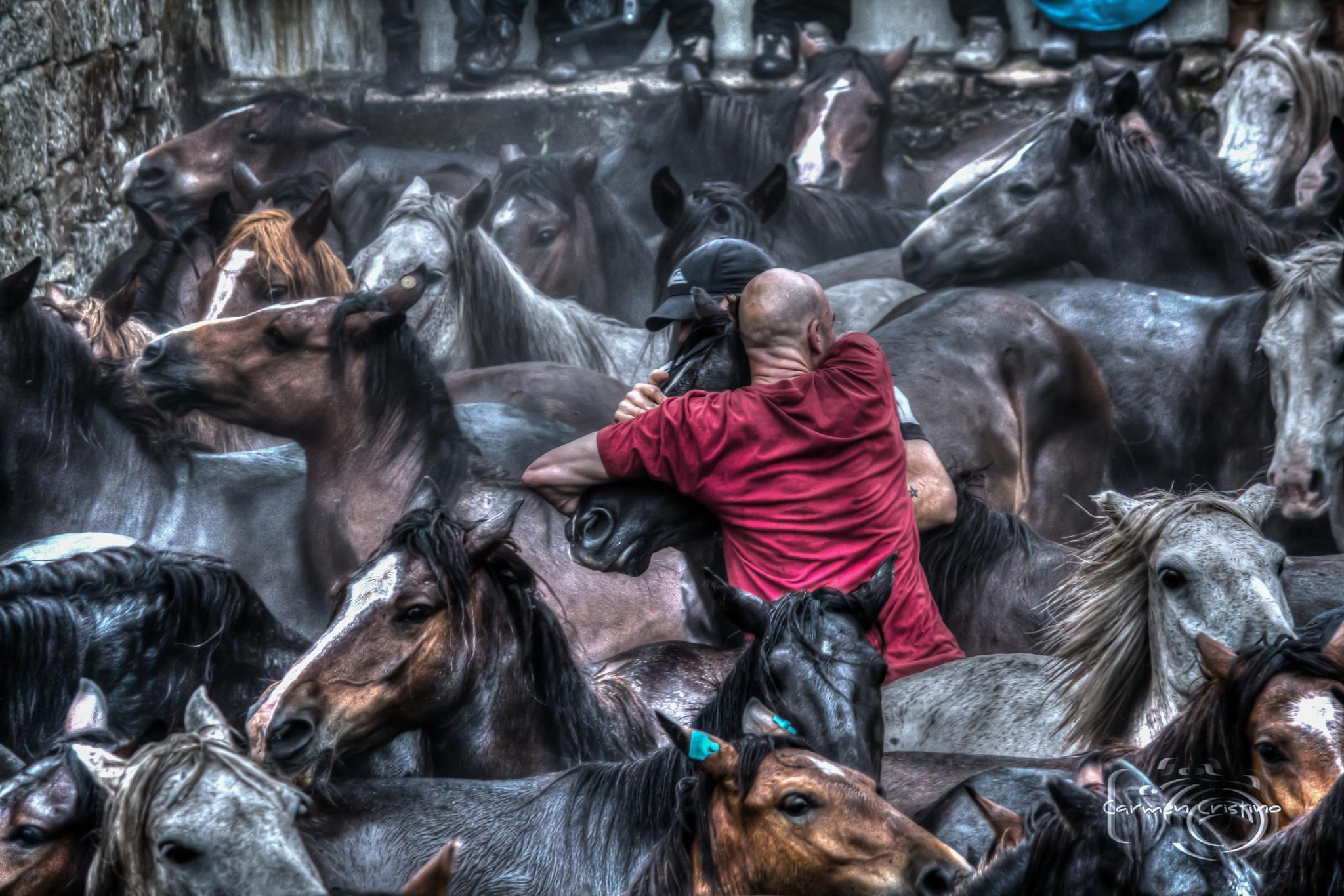 Horses 4 by carmen_cristino