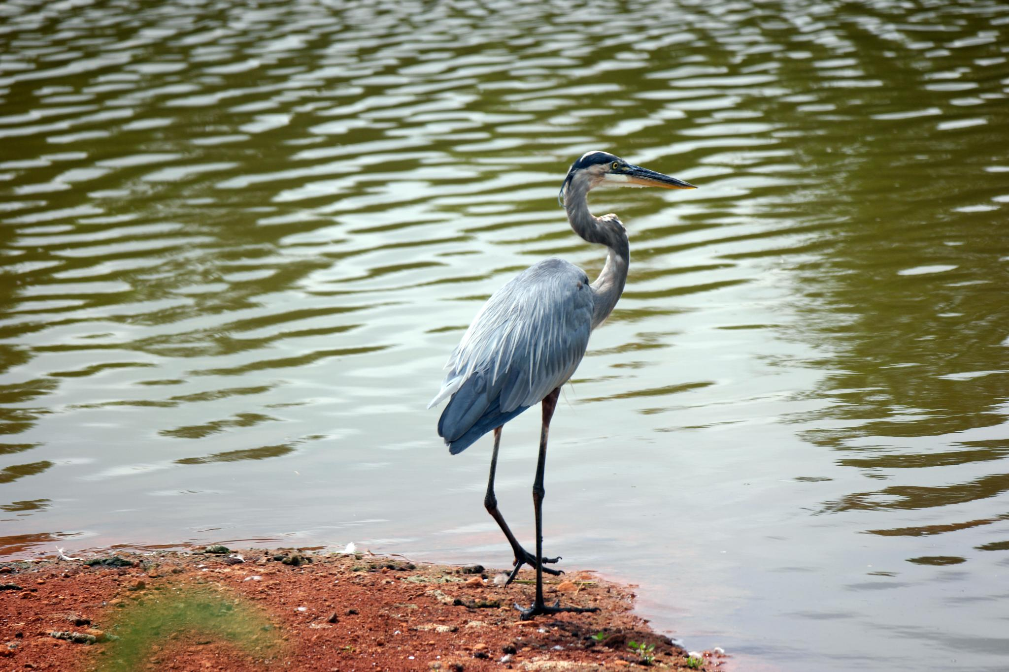 Bird and Water by afryans