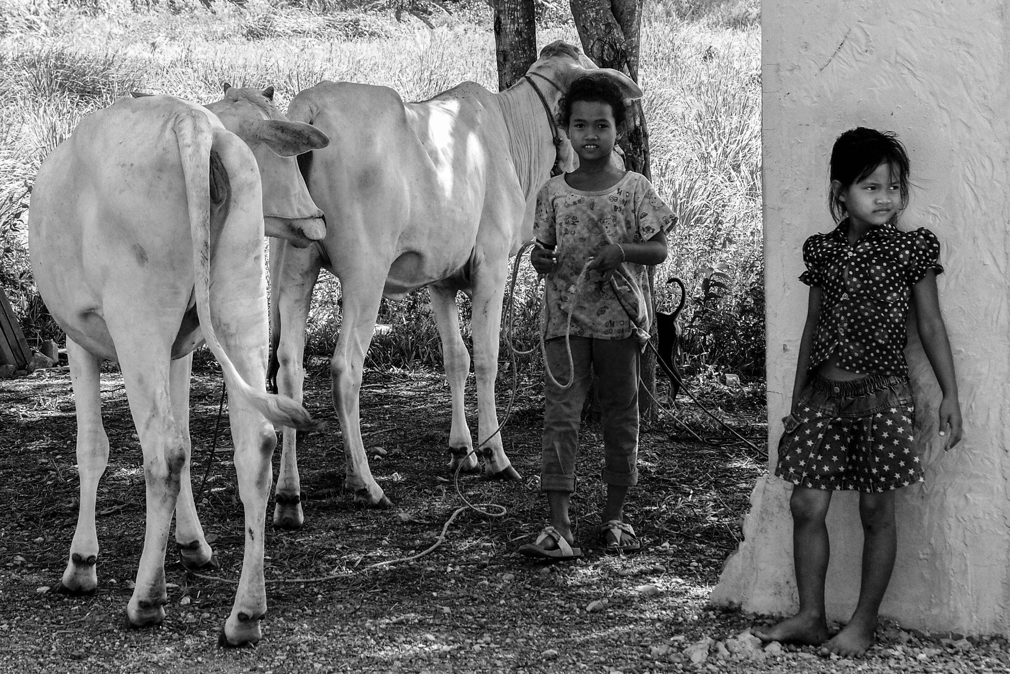 farmer kids and their cows  by amelia bertmar