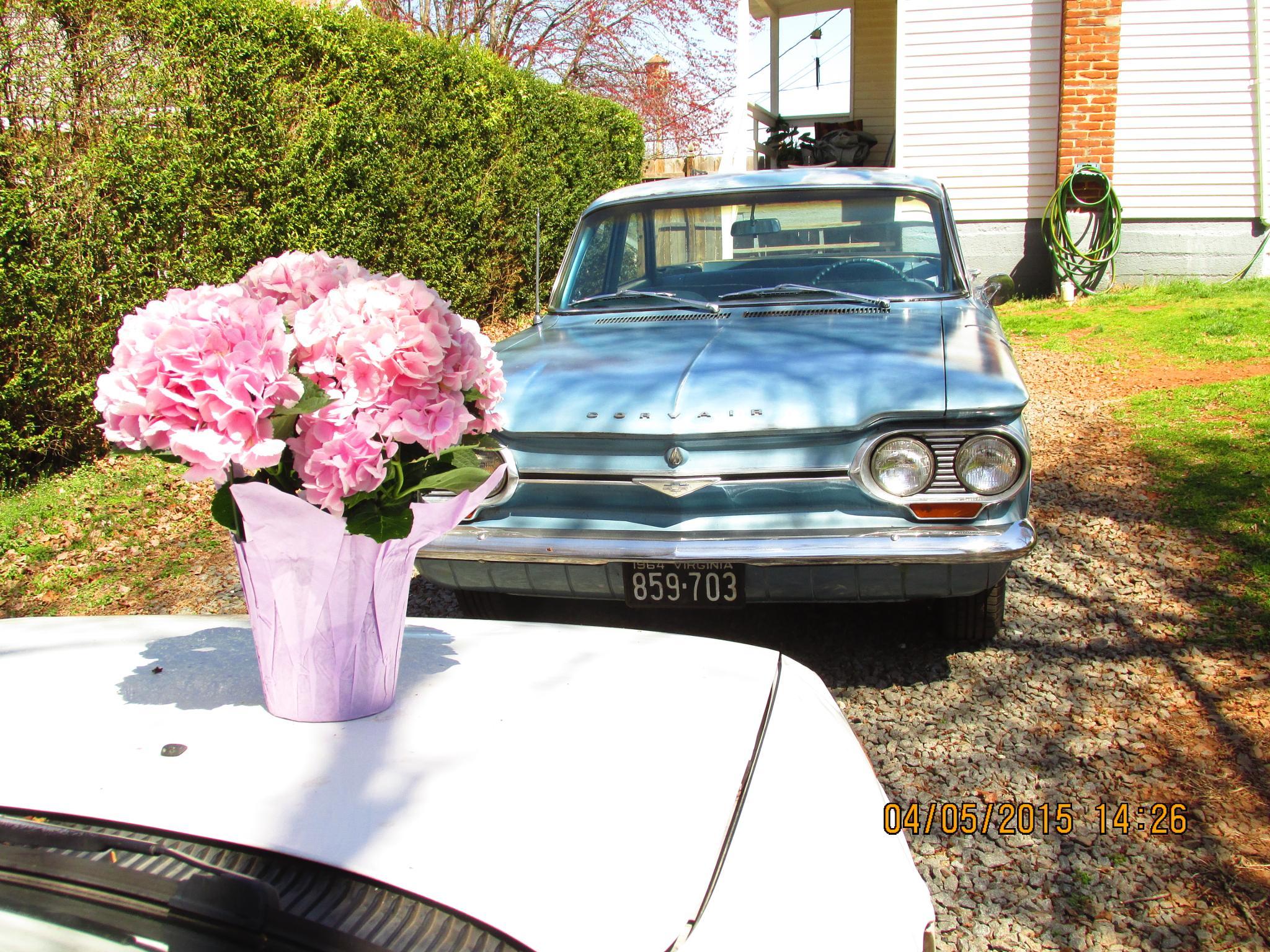 Hydrangea and movie star car by bj.ameyguckert