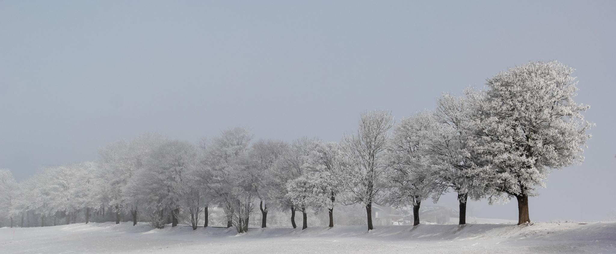 Winterdream  by manuwa
