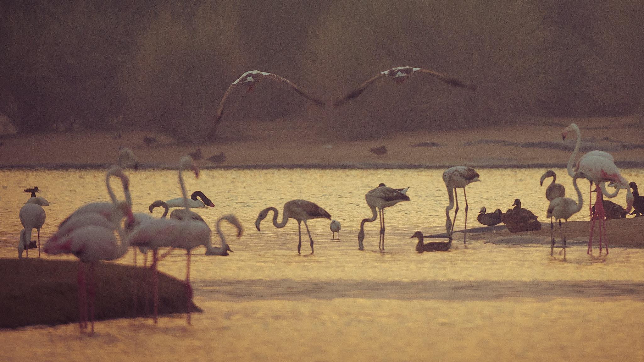 Gathering by Babar Swaleheen