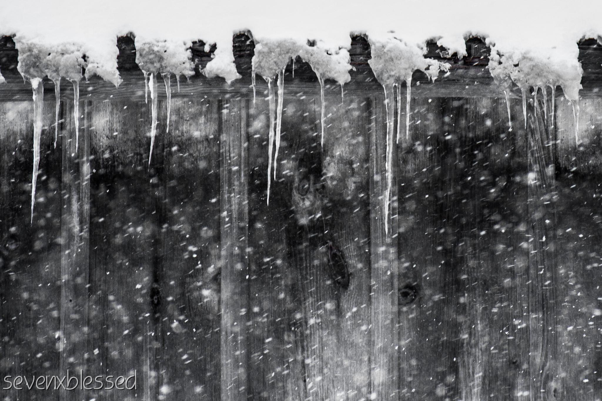 snowflakes and icicles by Michelle Danker
