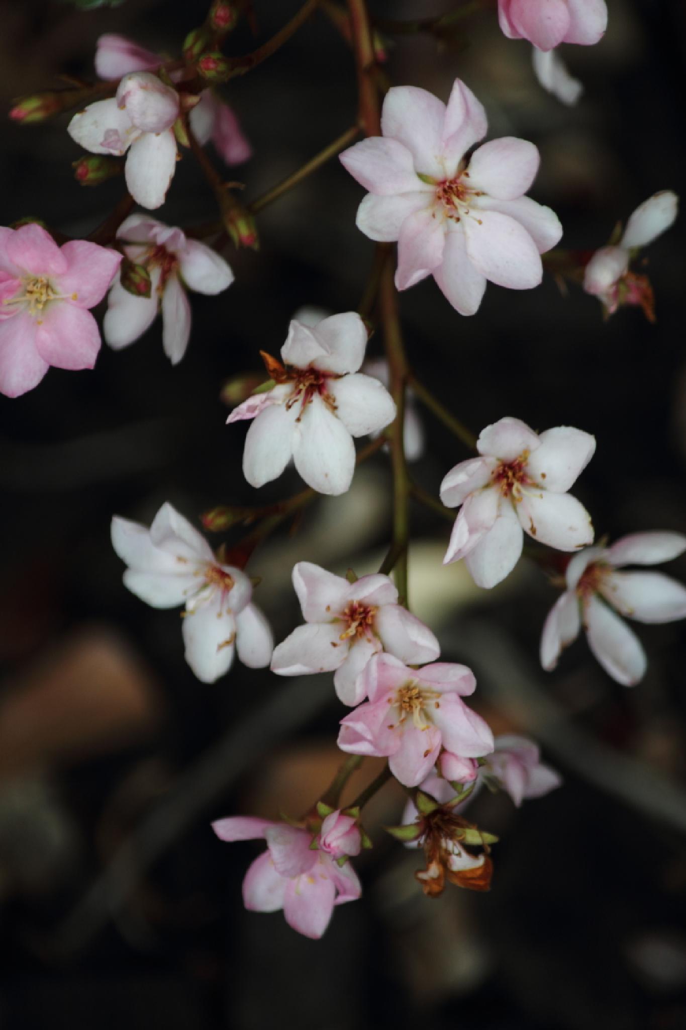 Spring Forward by kat.larsen1