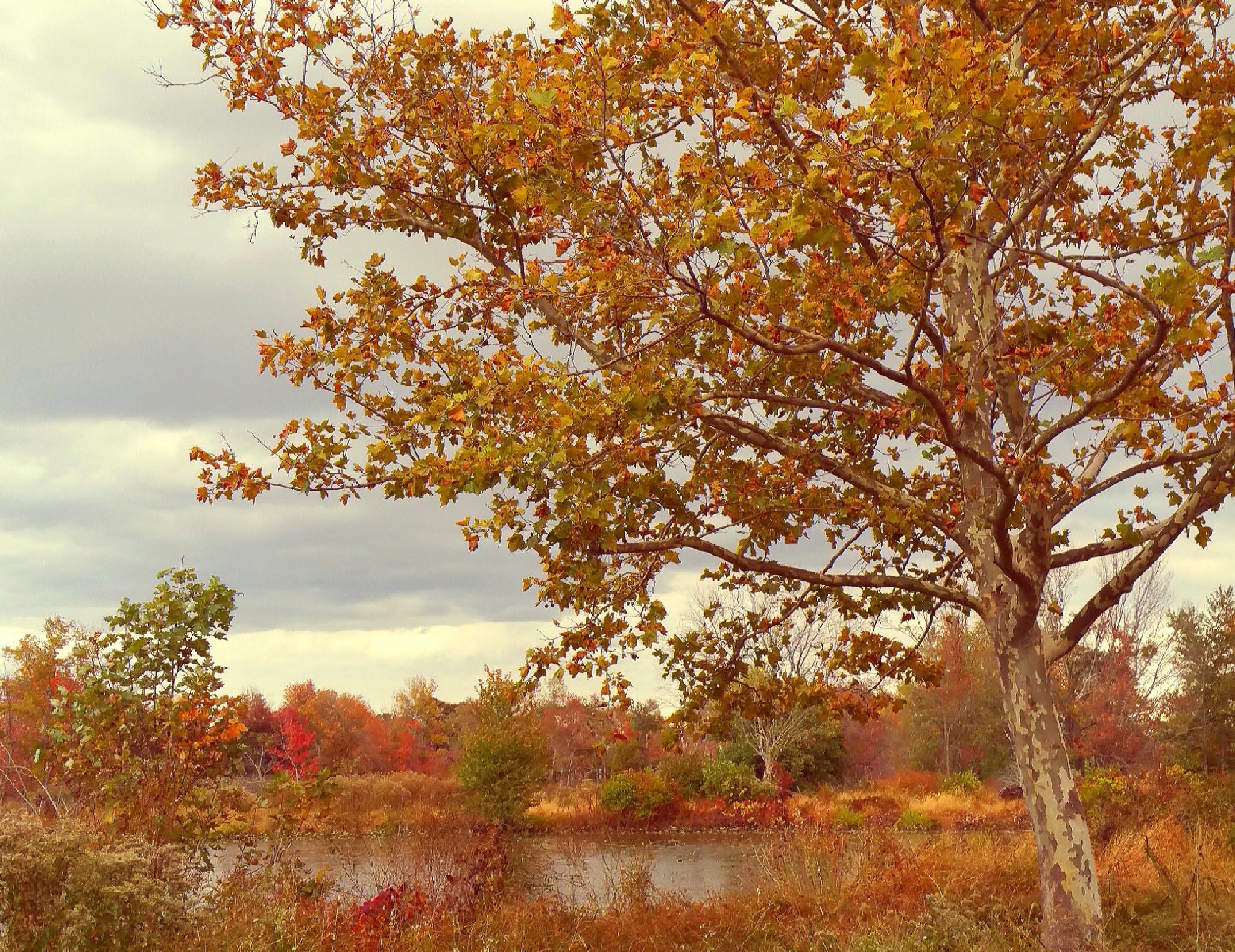 Autumn's Amber Tones by diane.aldrich.14