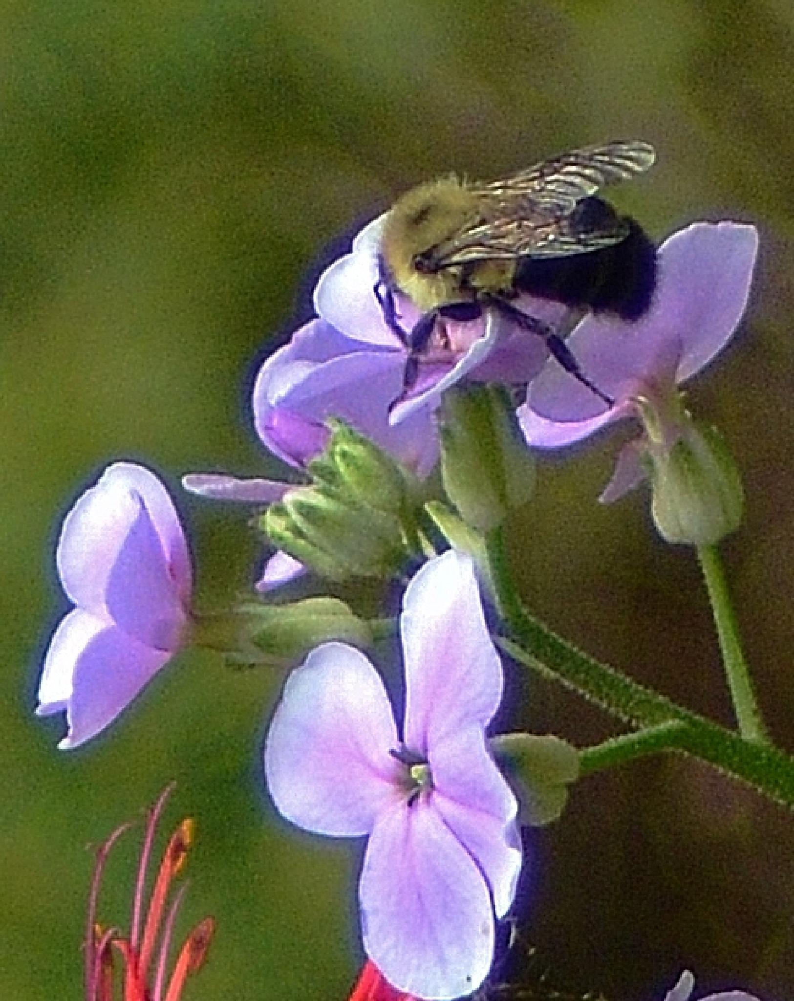Humble Bumble Bee by sue hartman