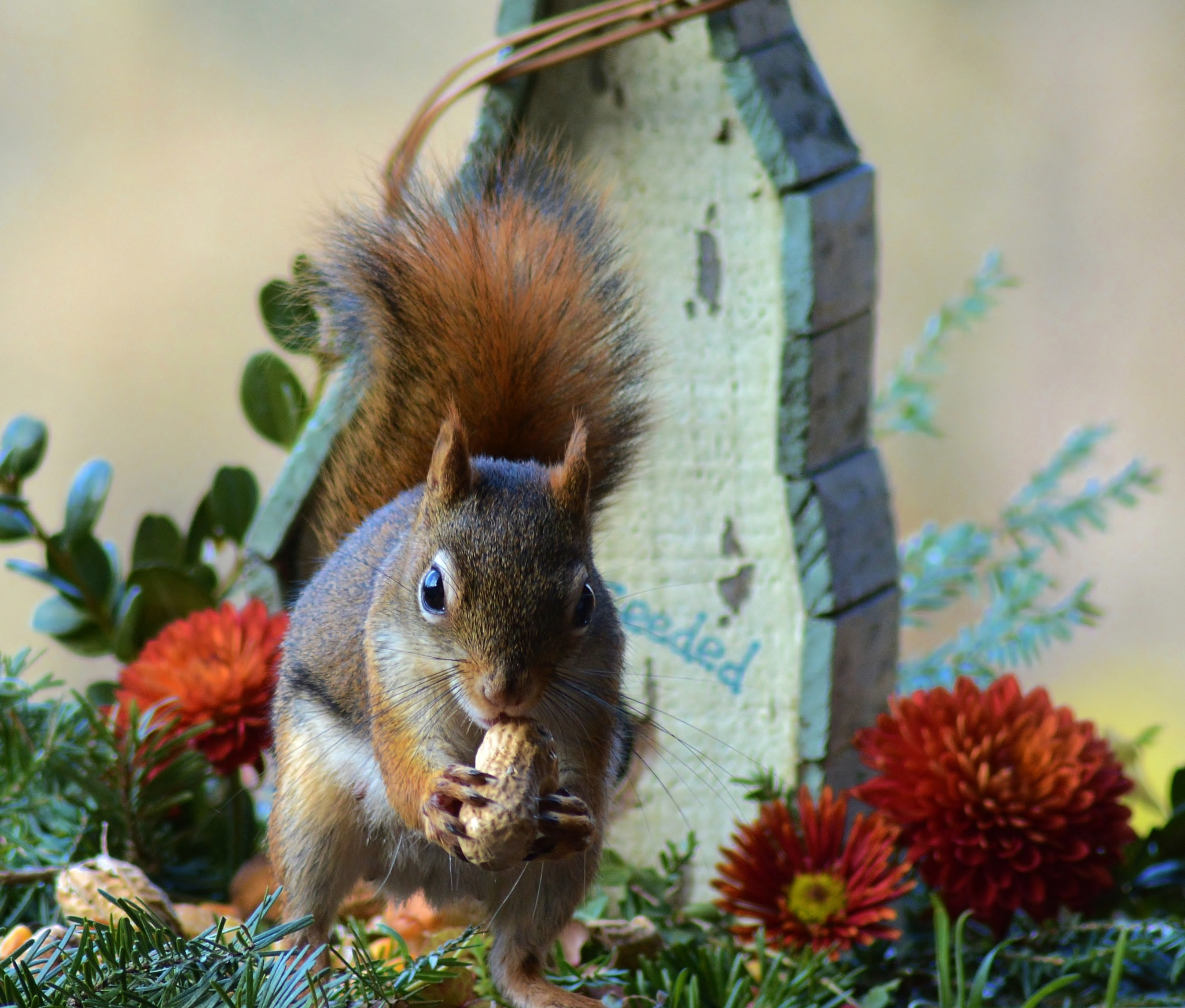 """""""Stopping by for Lunch"""" by sue hartman"""