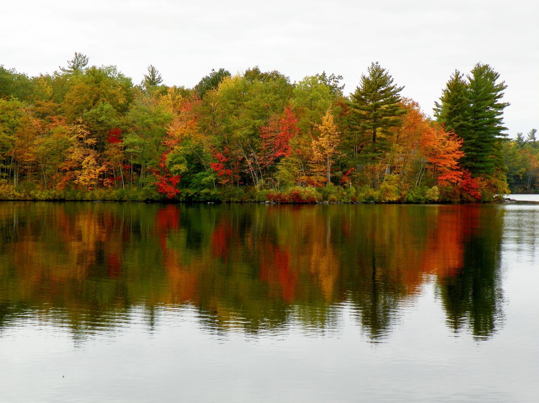 Bunganut Lake Foliage  by Miller