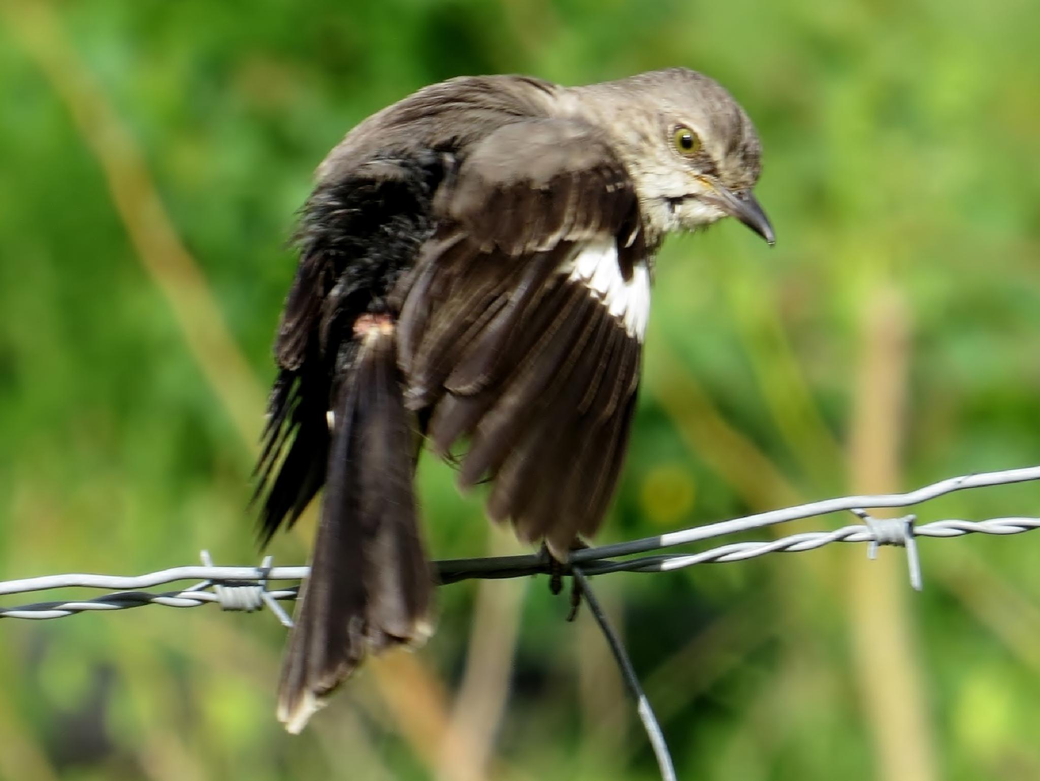 Grumpy Bird........... by hnheather