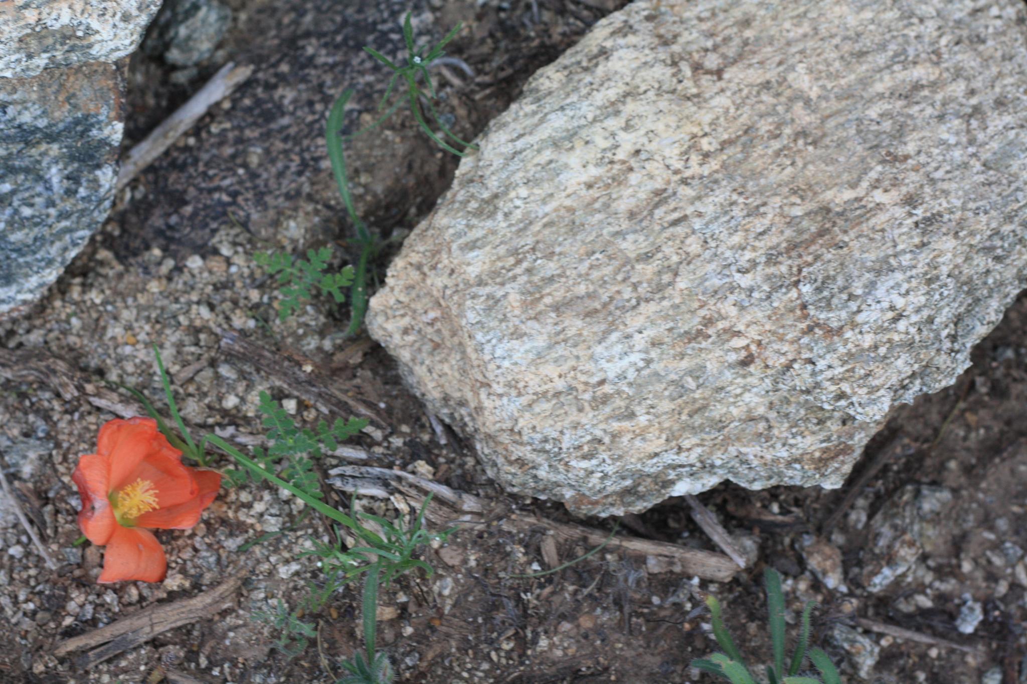 Photo in Landscape #flower #rocks #contrast