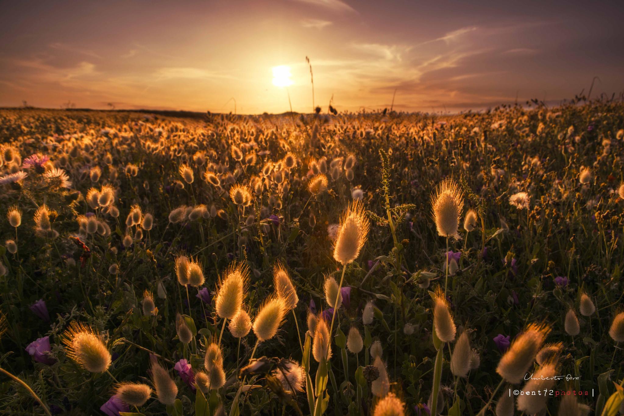 spring by Umberto Fara Photography