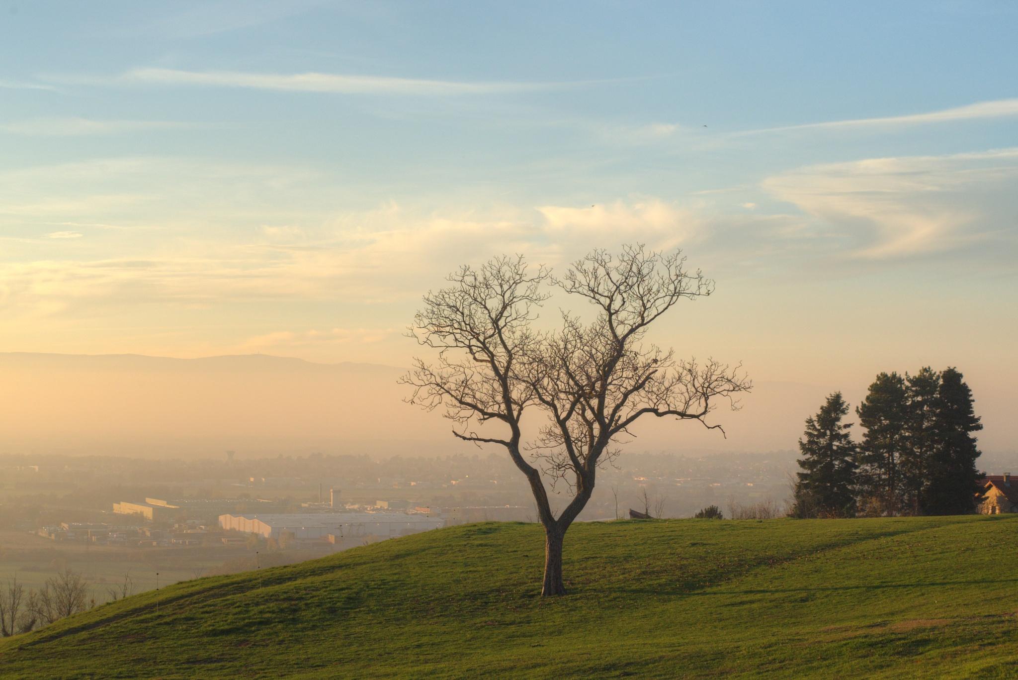 St bonnet les oules, arbre dominant la plaine du forez by bernardf142