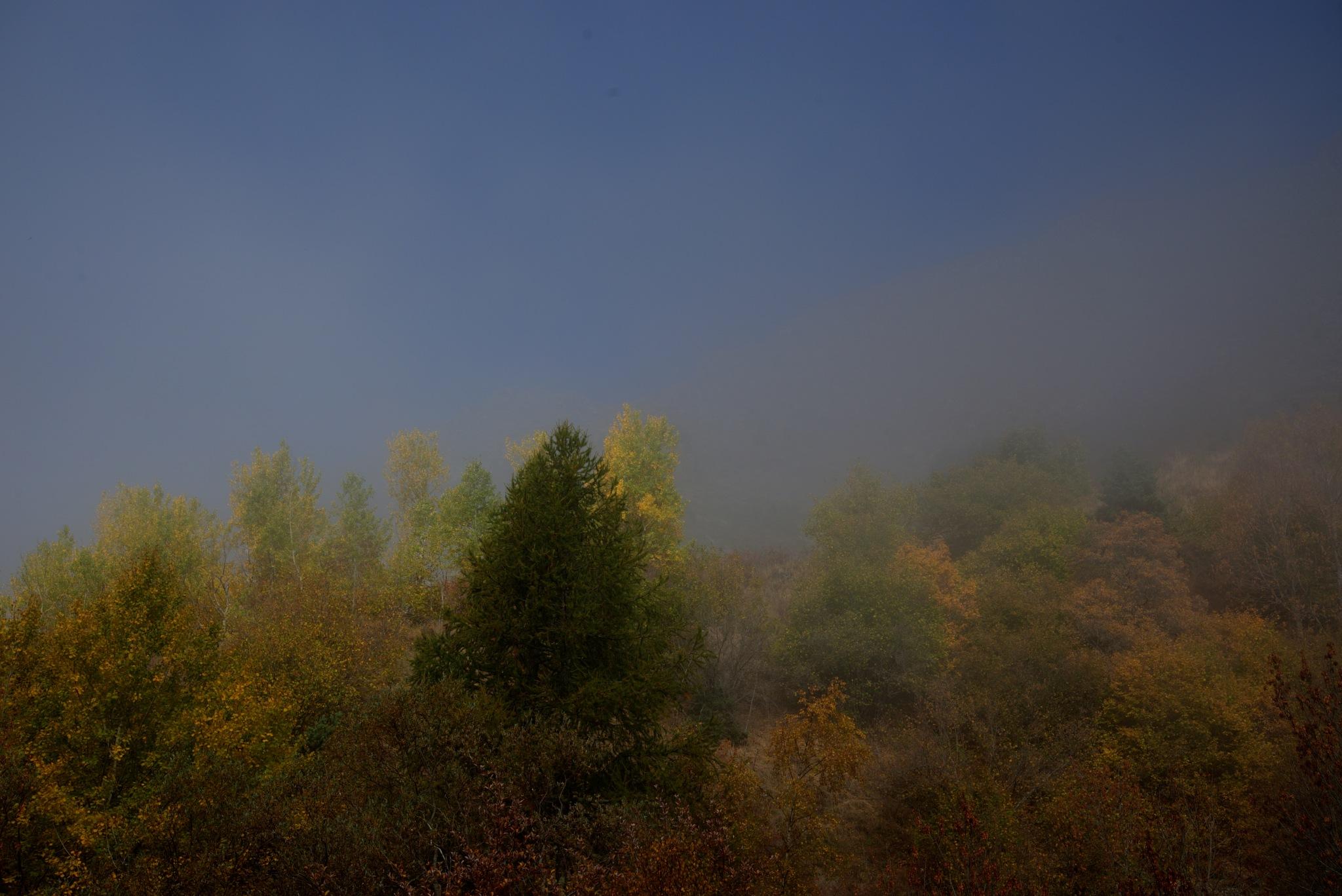 Limite de la brume by bernardf142