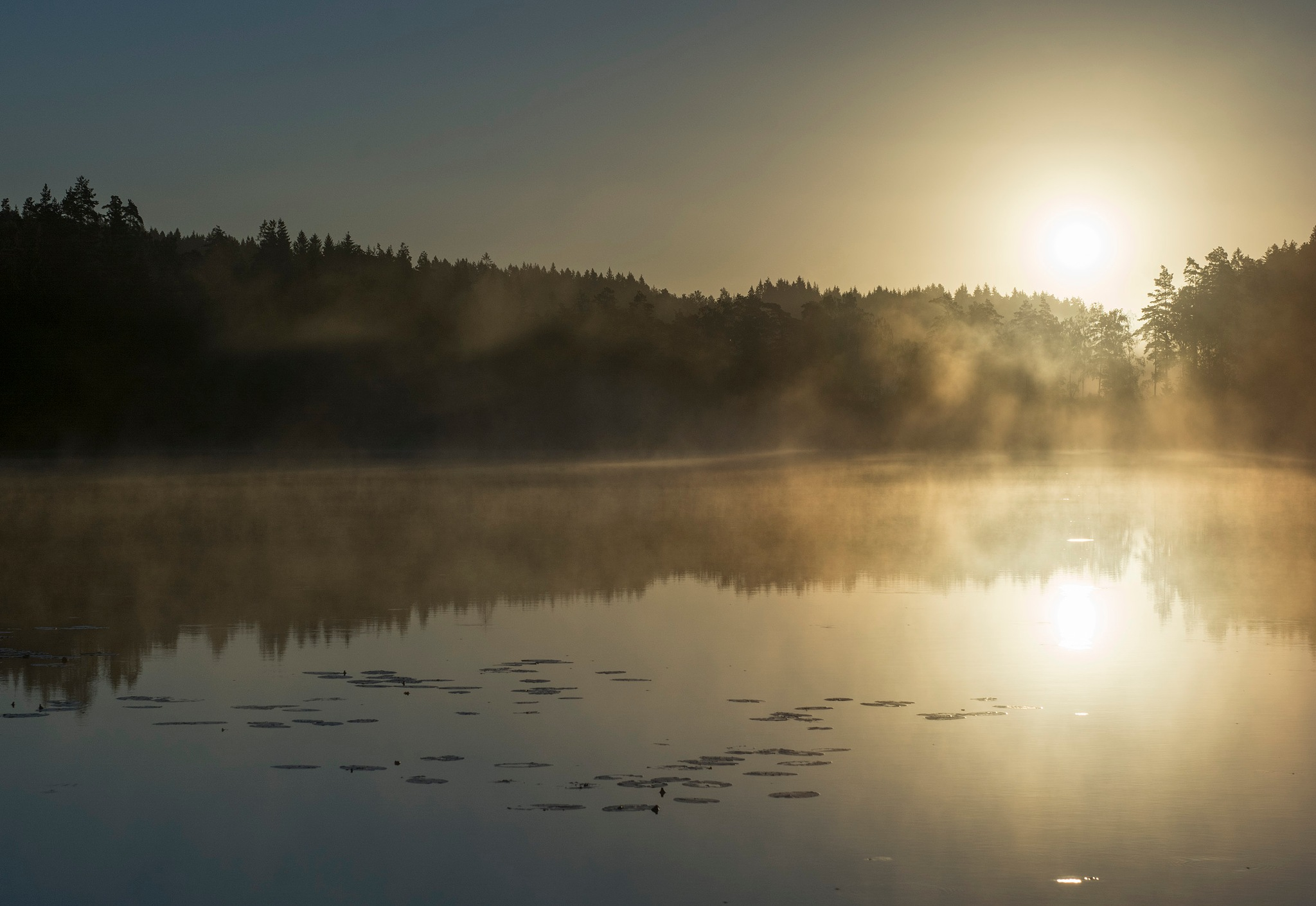 Morning light by Linda Persson