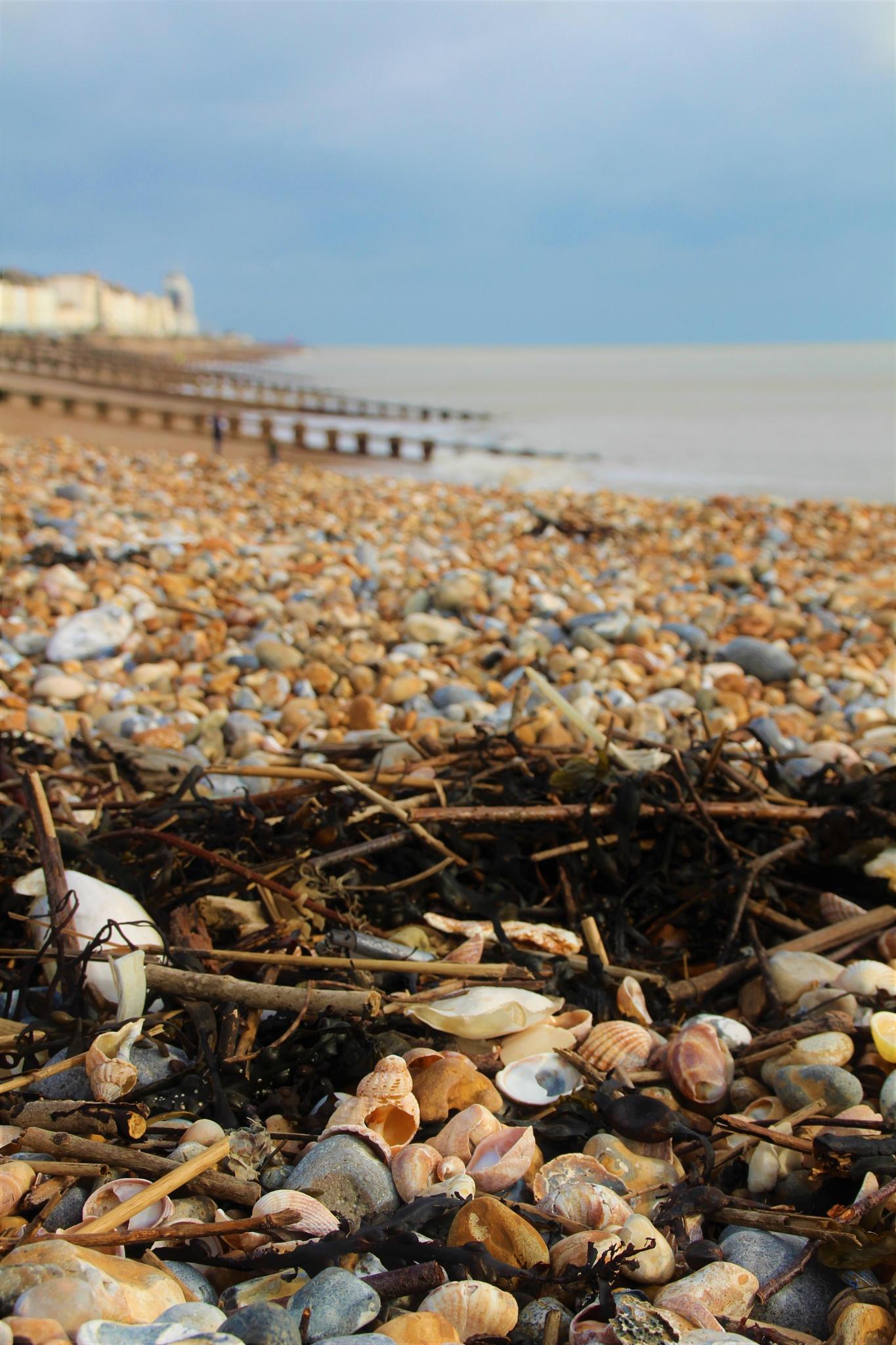beachcombing by alijhawkins