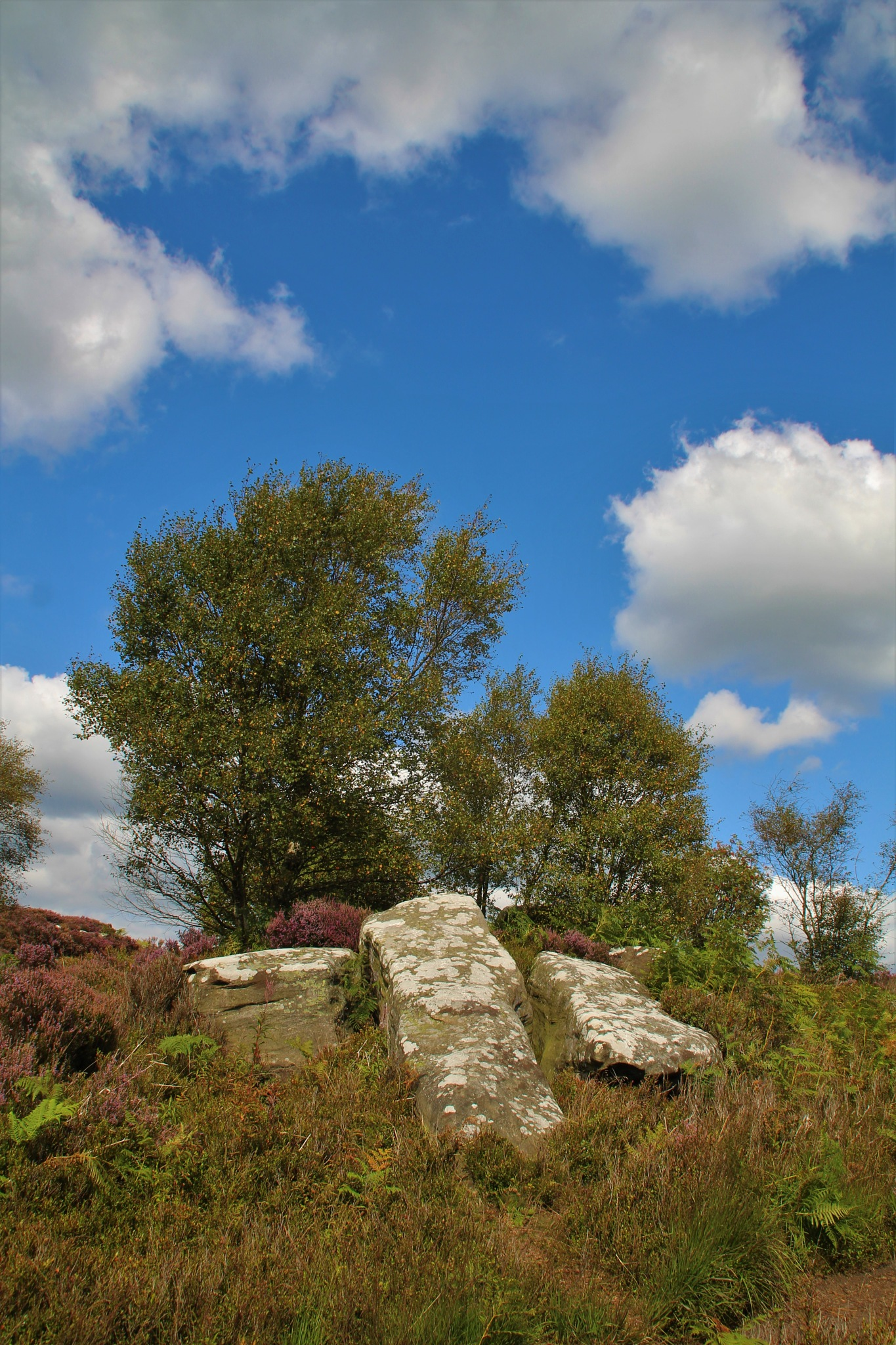 Brimham Rocks by alijhawkins