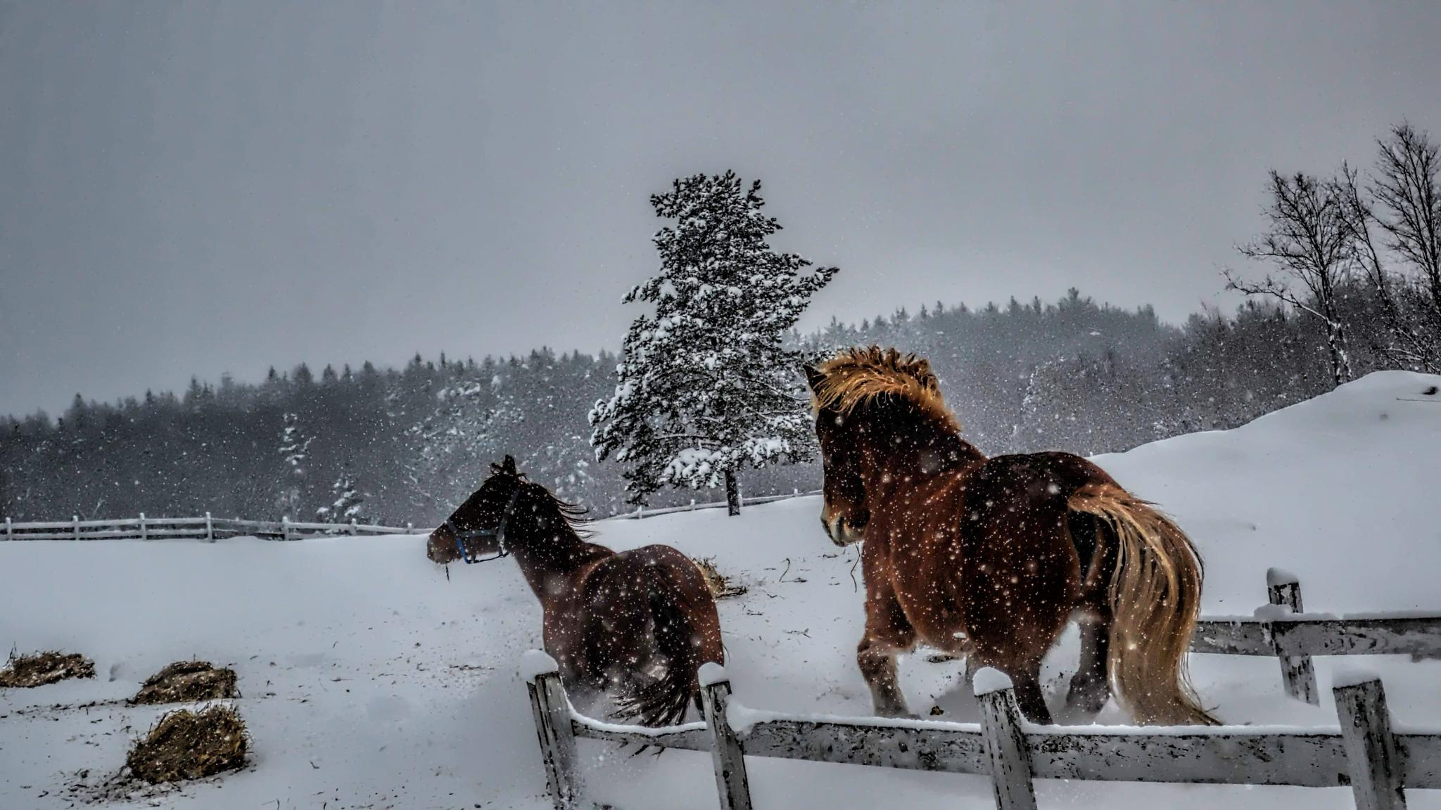 Full of it in the snow. by terrie.l.carter
