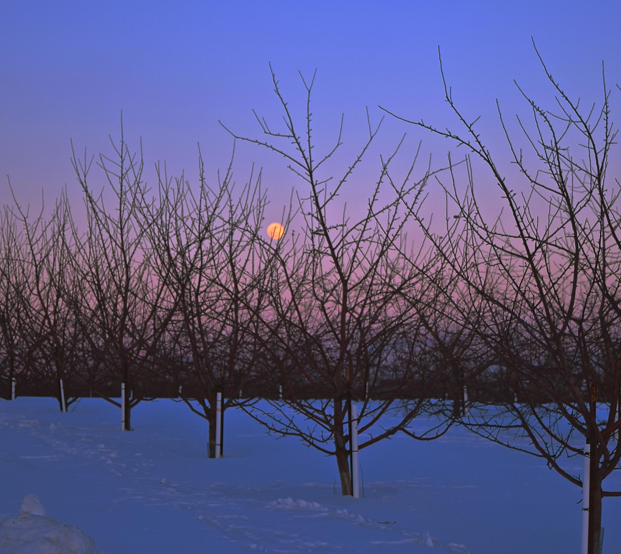Orchard Moon by vonda.lavway