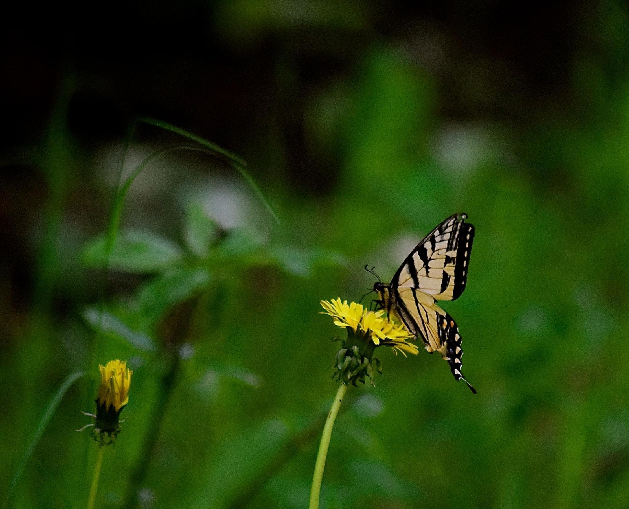 """Flutterby"" by vonda.lavway"