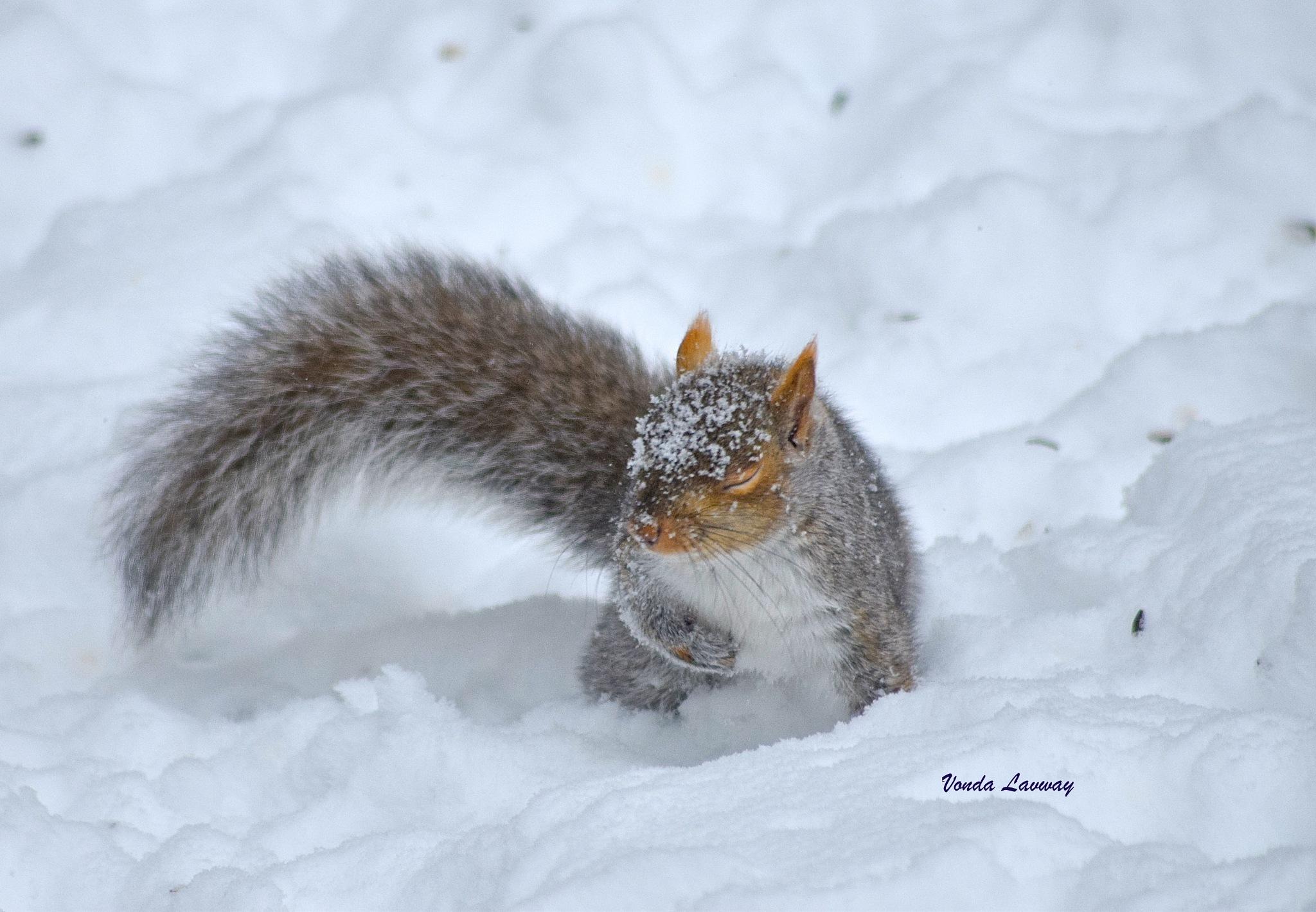 Grey Snow Dive by vonda.lavway
