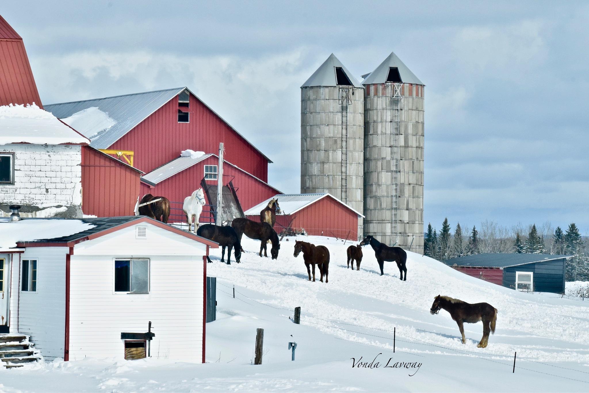 Winter Scene by vonda.lavway
