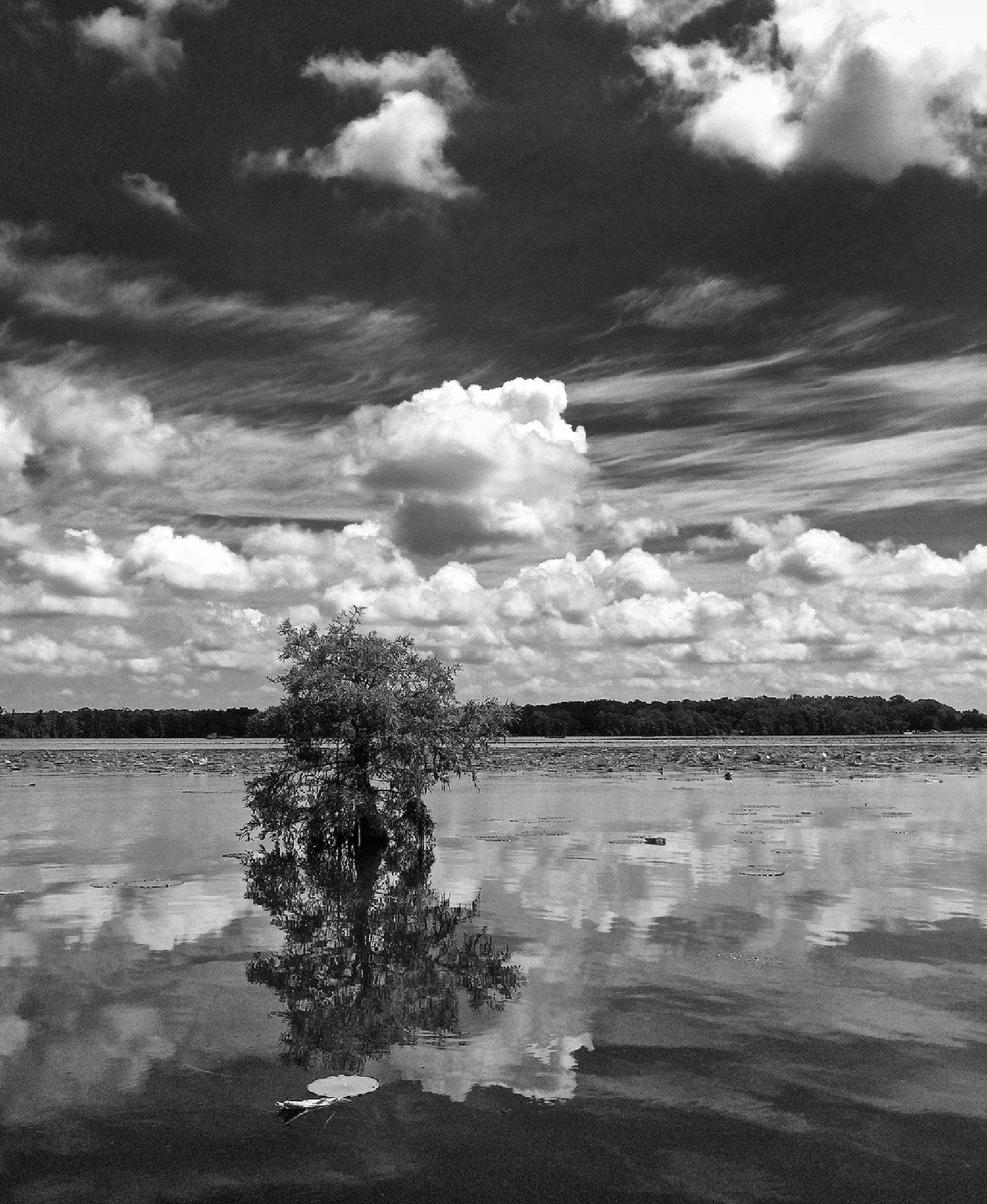 Lonesome reflection by Zeralda