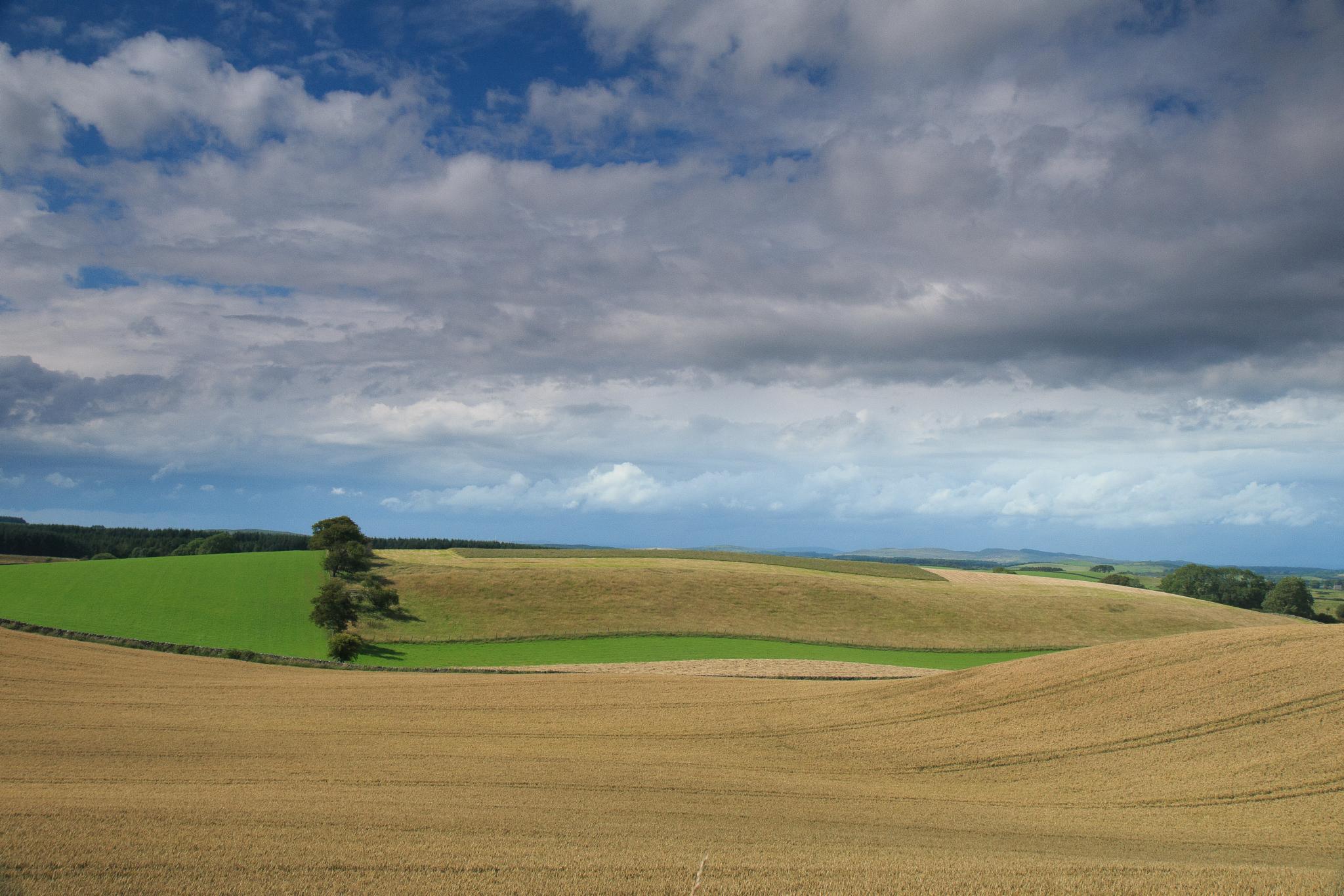 A Scottish Landscape by Jill Harrison
