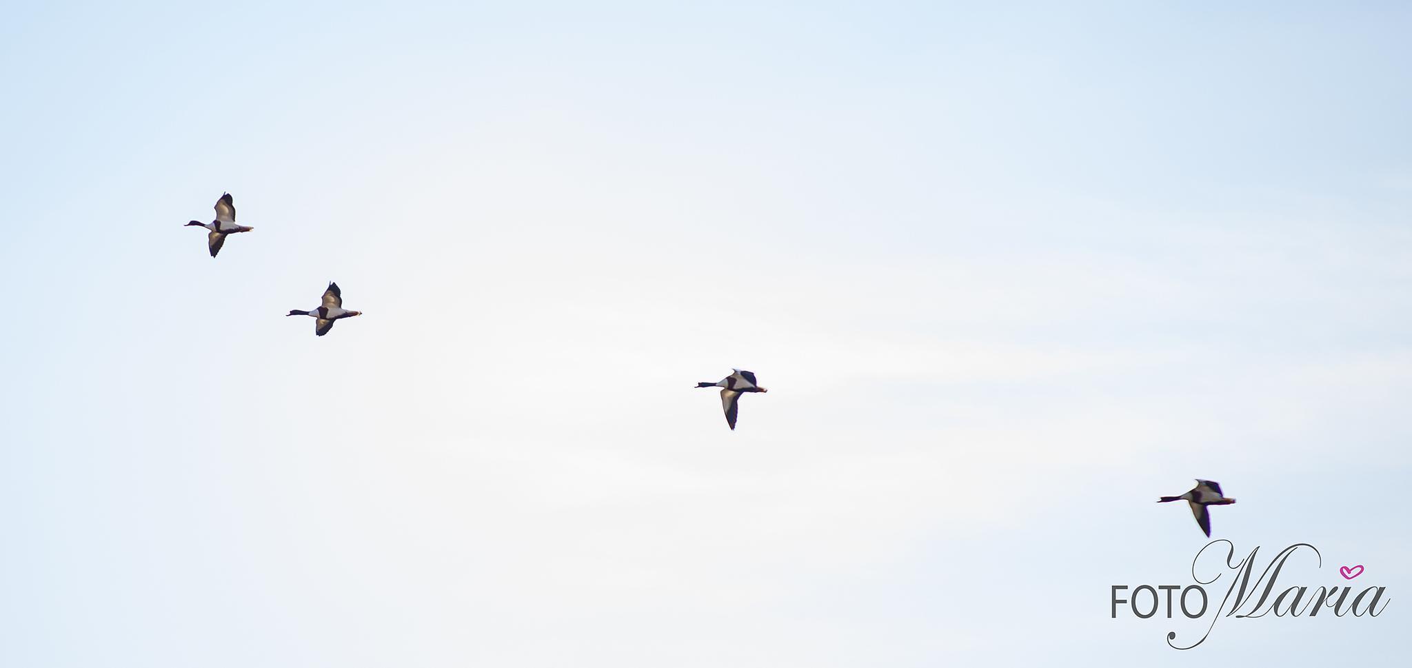 Flying Birds, gravand by photobymaria