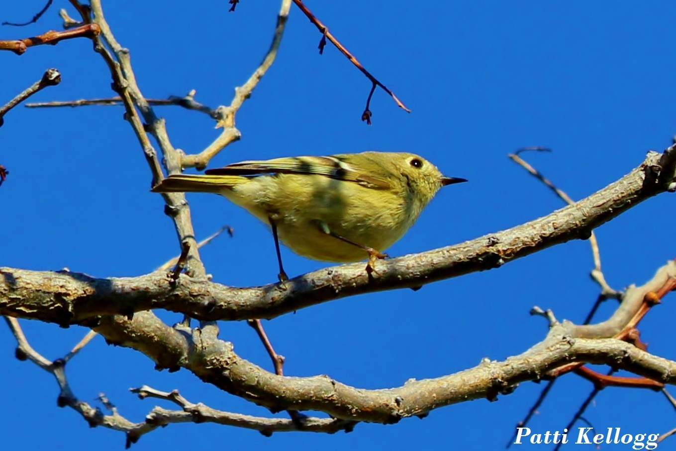 Finch by patricialkellogg