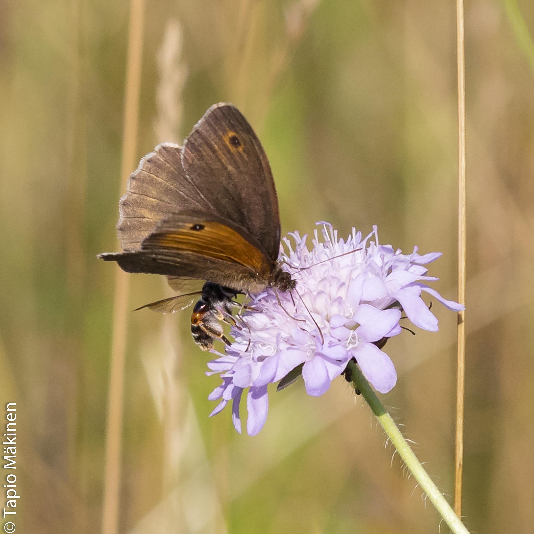 Photo in Random #butterfly #flower #sumer