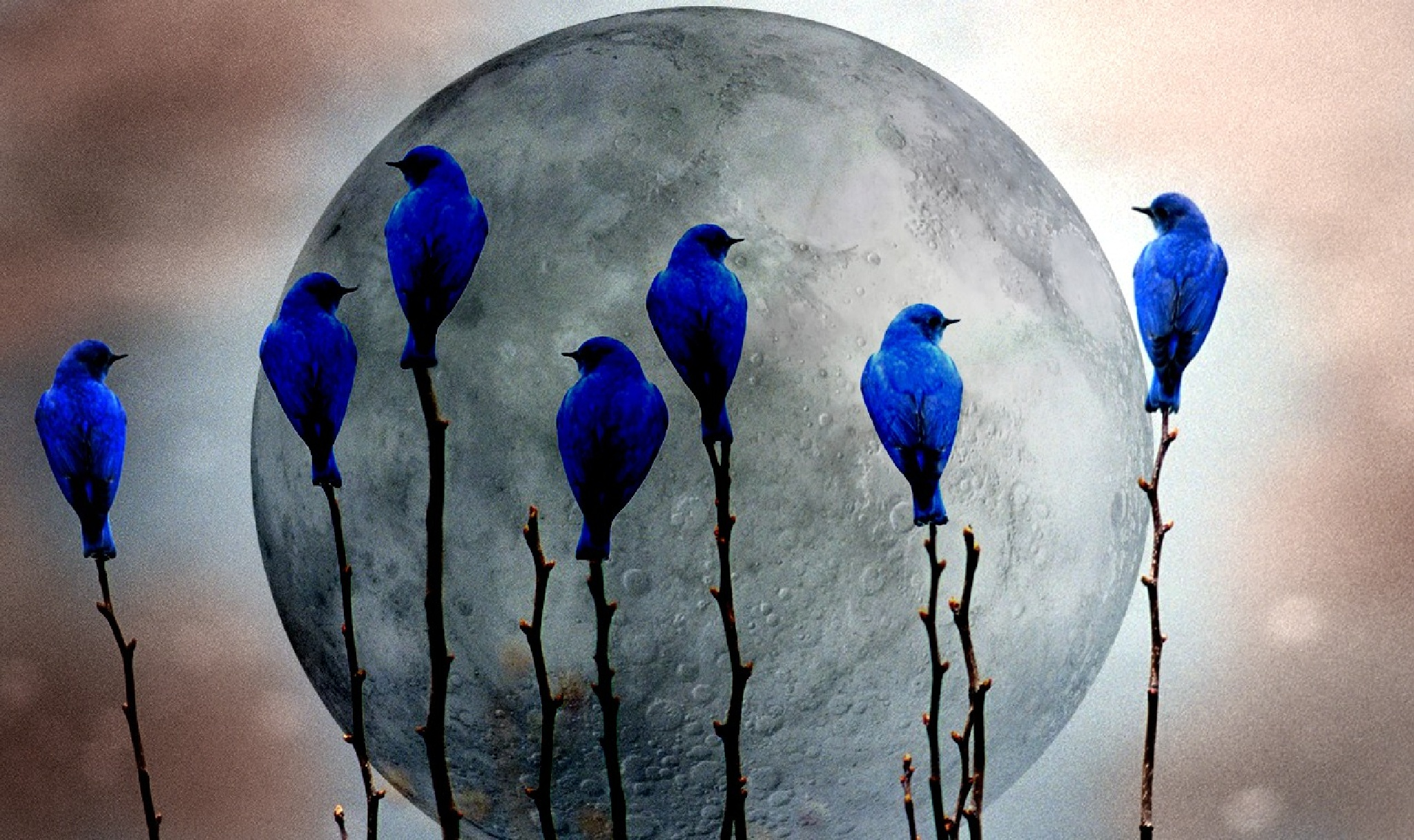 Blue birds with the moon by licious062663