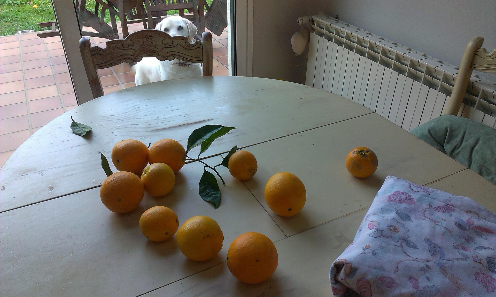 Winter Fruit by Con de Noro