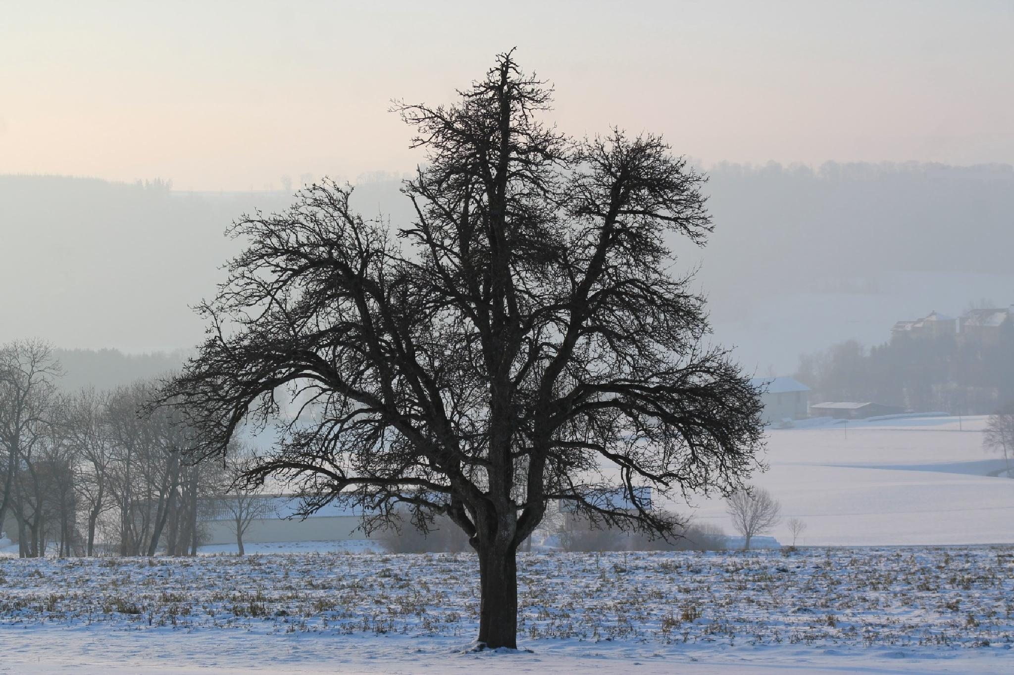 Bare tree! We dress for warmth and nature undresses! by Andre RAMSEYER
