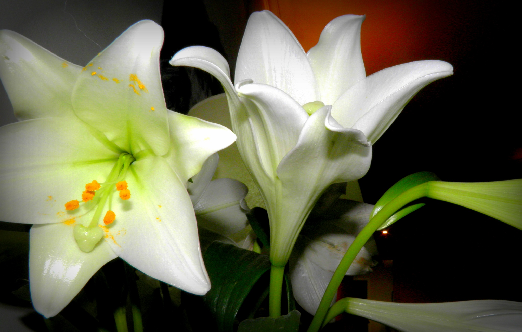 The lilies are well open not long begore they are gone !!....... by karenanne.borsani