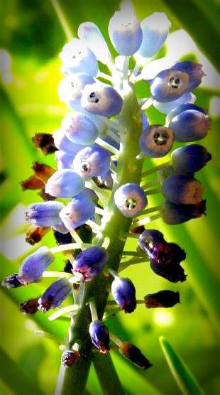Blue .... by karenanne.borsani