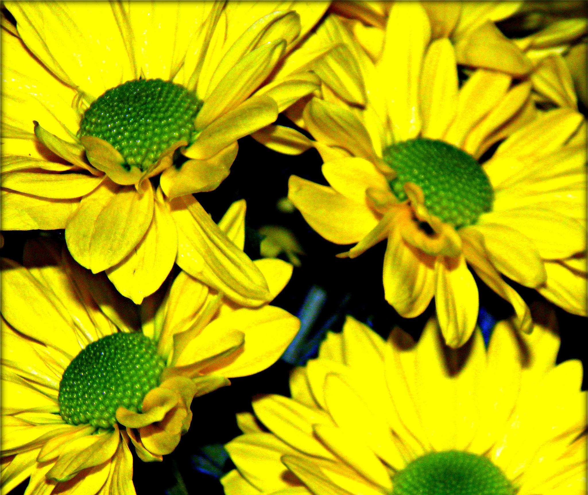 A yellow burst..... by karenanne.borsani