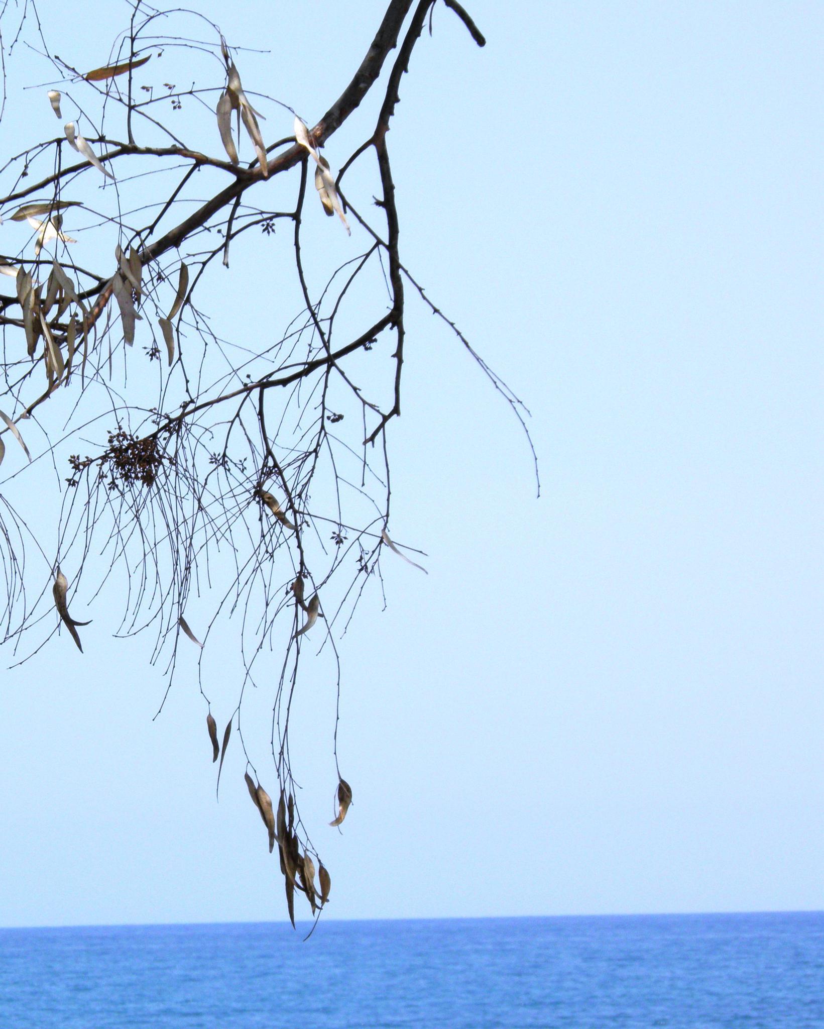 A lonely Branch....... by karenanne.borsani